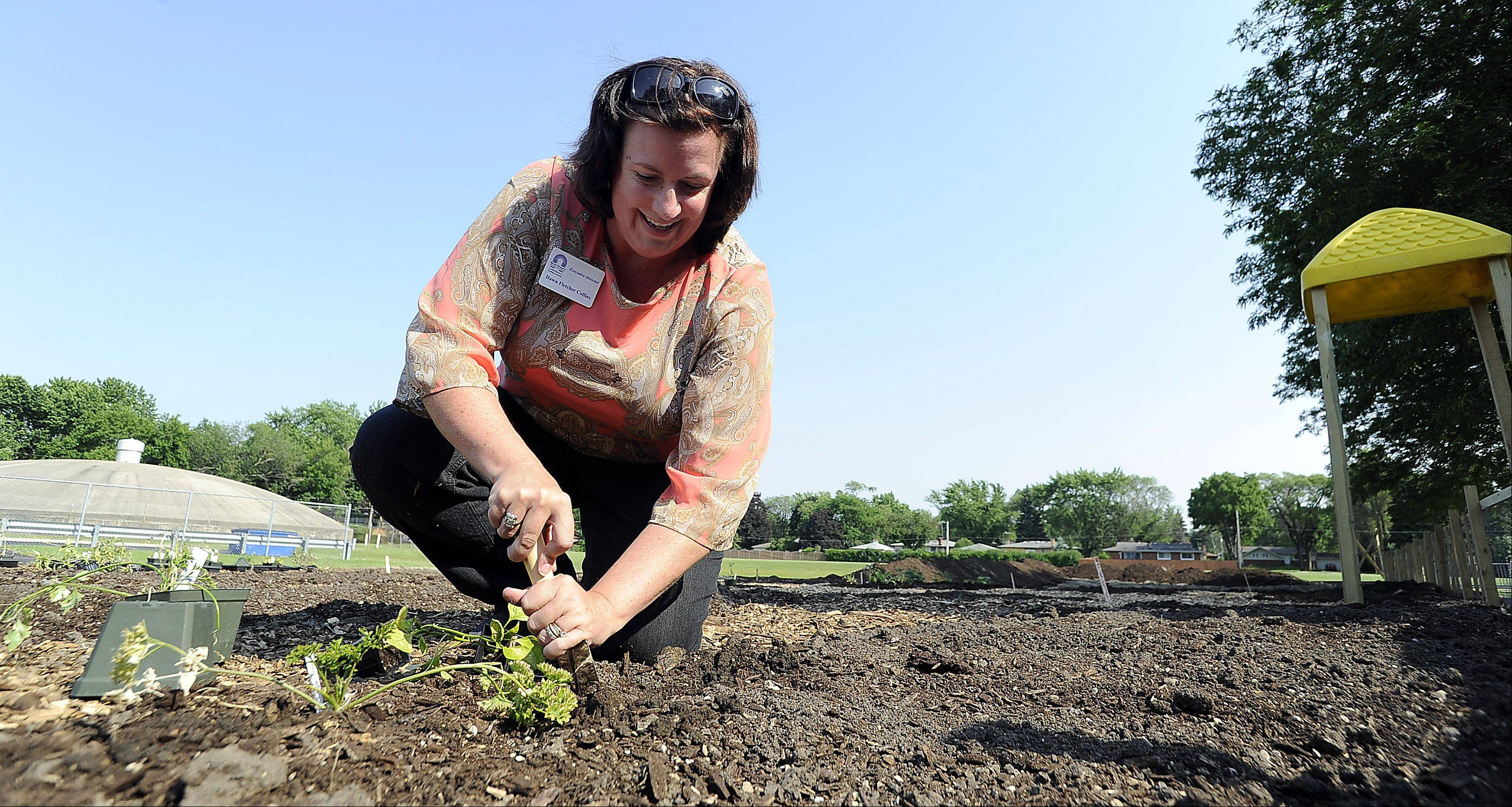 Dawn Fletcher Collins, executive director of the Mount Prospect Chamber of Commerce, plants her garden in honor of her mother, Audrey, who just died, at the After-Hours Networking Event Thursday celebrating a new community and school garden at Euclid Elementary School.