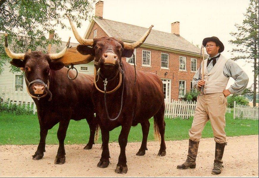 Costumed interpreters will introduce visitors to farm life, 19th-century style, at Garfield Farm Museum's 1840s Day.
