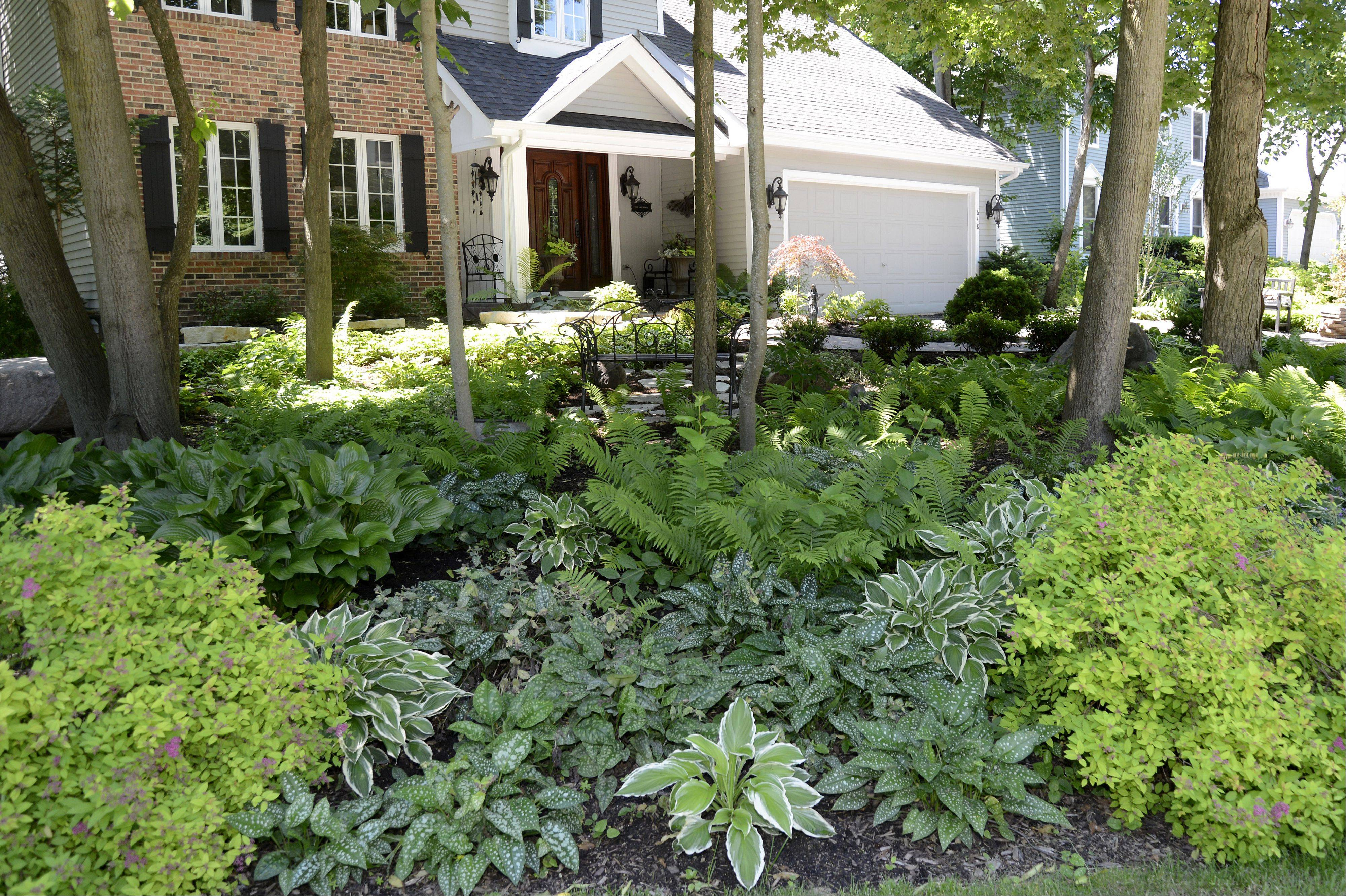 "The front yard of Sandi and David Leeming's Batavia home, which will be part of the Batavia Plain Dirt Gardeners ""Gardens of De-Light and Shade"" garden walk on Saturday, June 22."