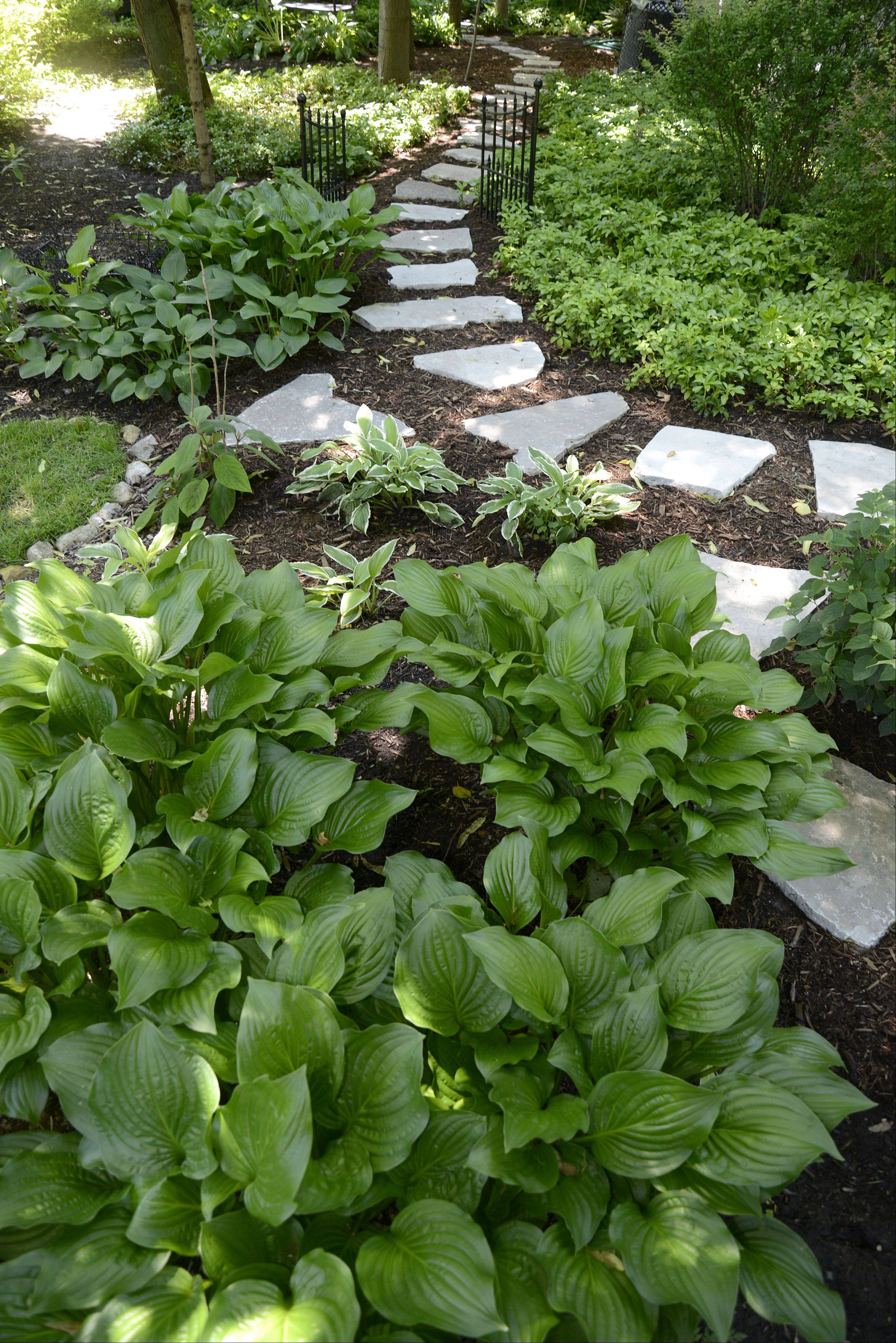 Hostas line a stone path in the back yard of Sandi and David Leeming's Batavia home.