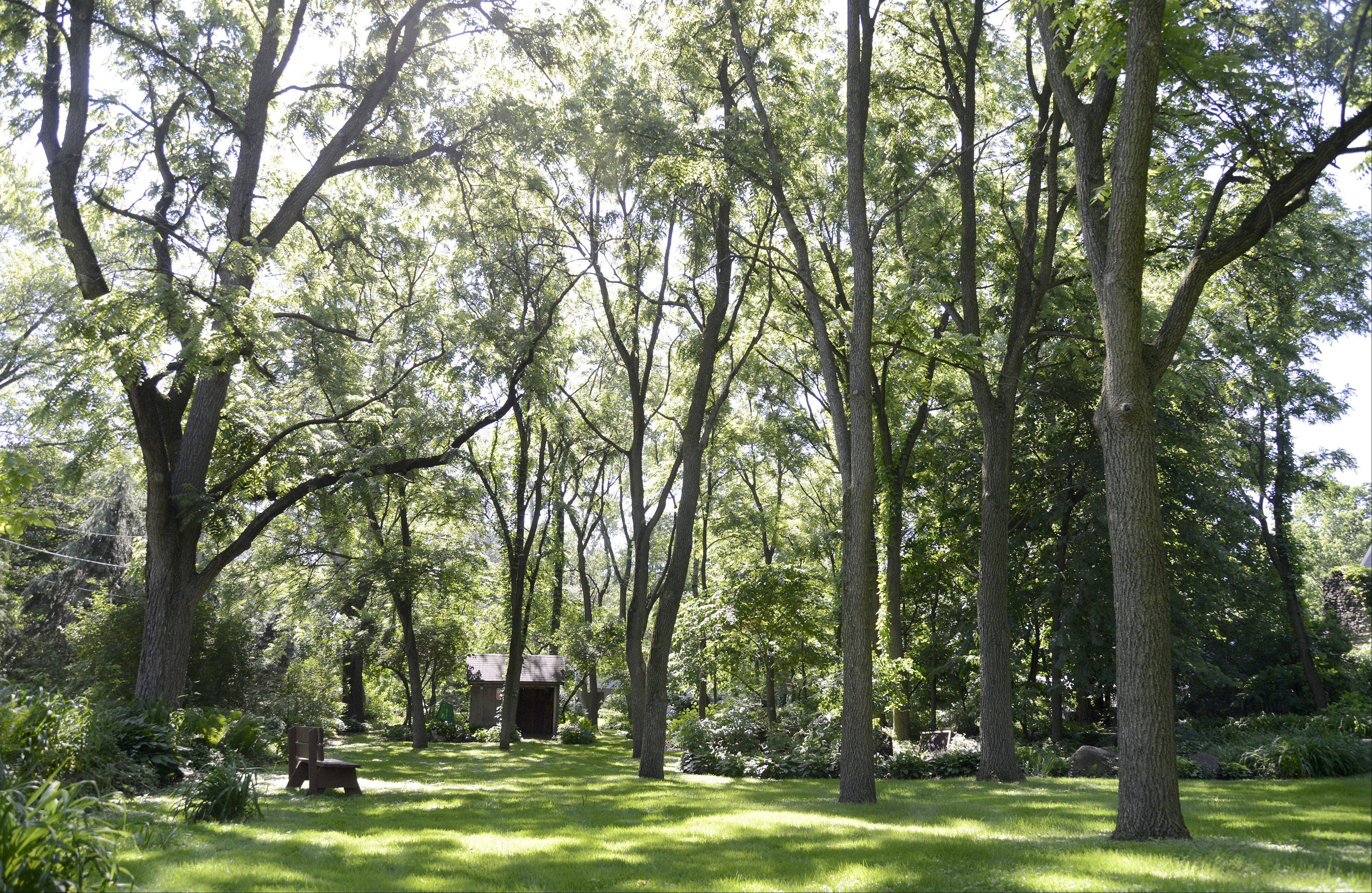 "Mature trees reach skyward in the front yard of Mary Ann and Ron Gilkerson's Batavia home. Their gardens will be part of the Batavia Plain Dirt Gardeners ""Gardens of De-Light and Shade"" garden walk on Saturday, June 22."