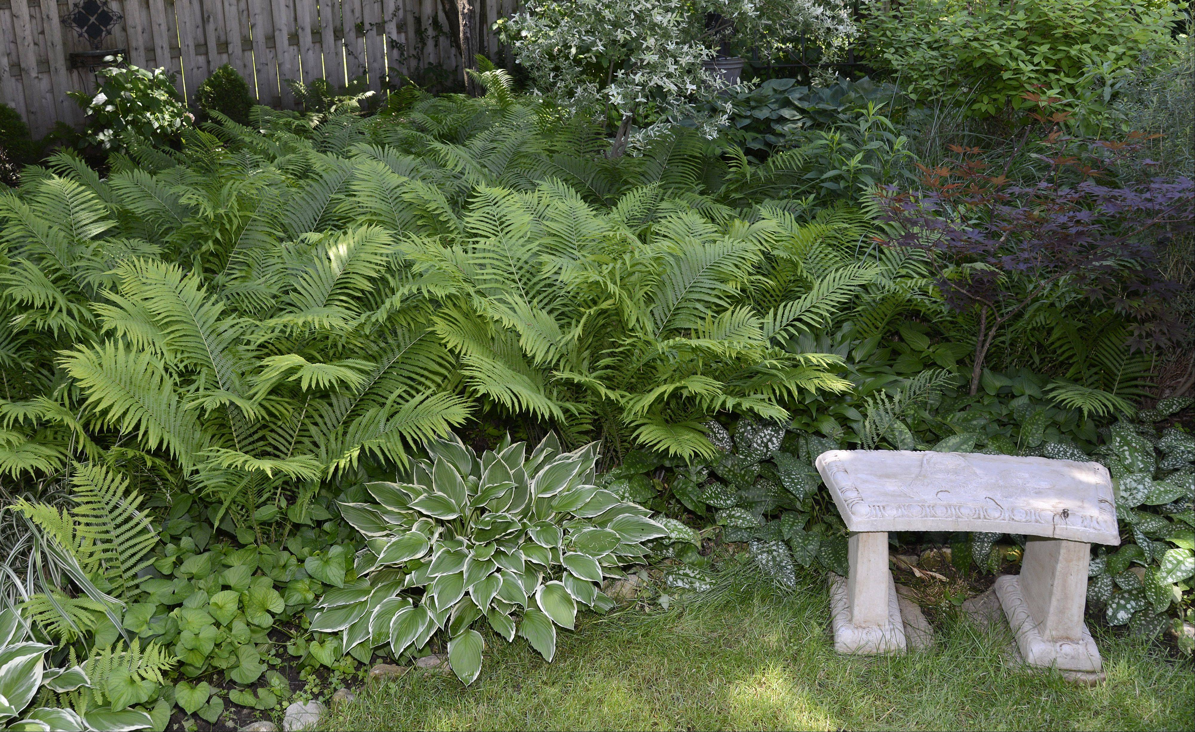"A sitting area offers respite in the back yard of Sandi and David Leeming's Batavia home. Their gardens will be part of the Batavia Plain Dirt Gardeners ""Gardens of De-Light and Shade"" garden walk on Saturday, June 22."