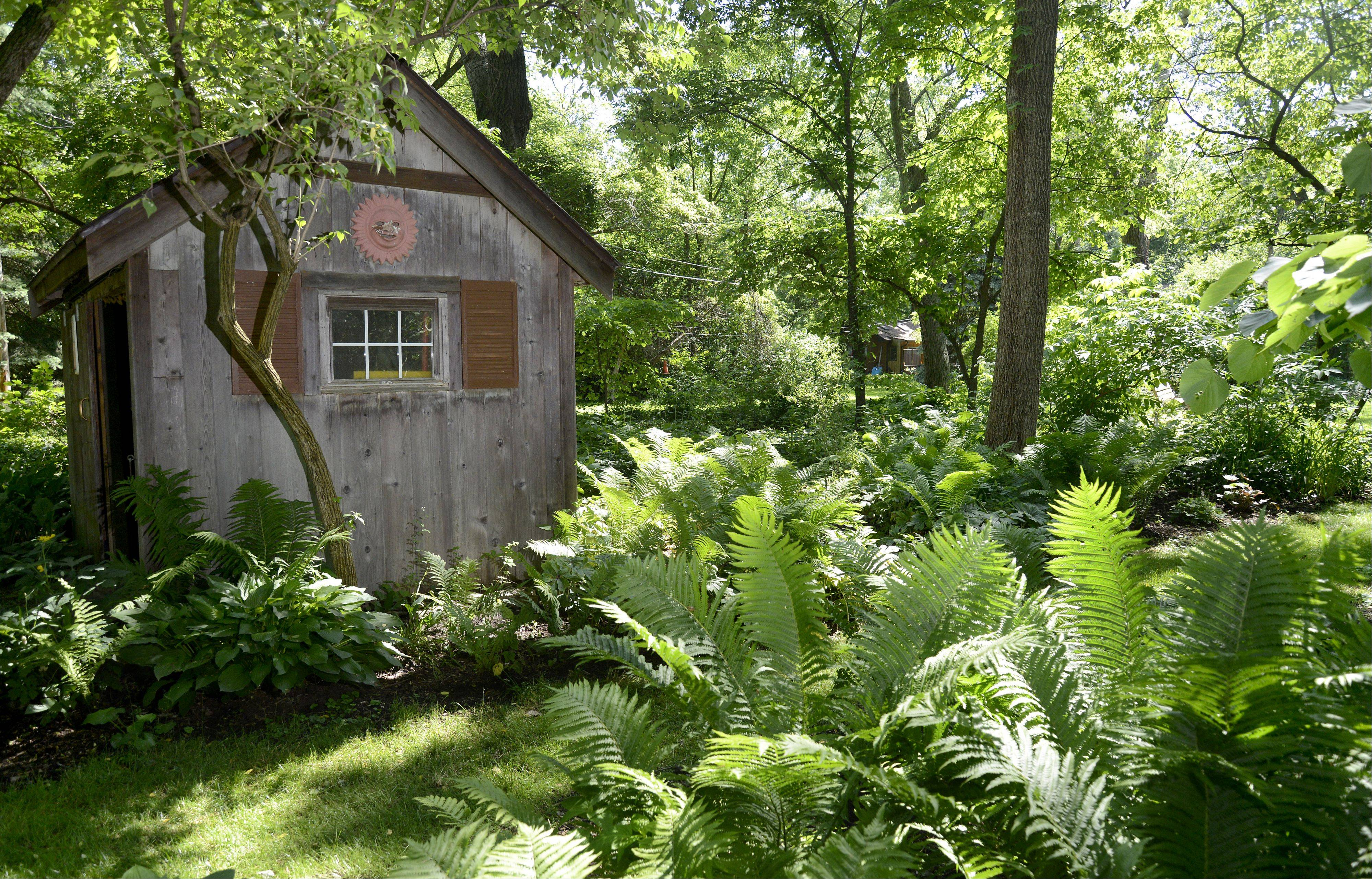 "A decorative tool shed sits among several shade beds in the front yard of Mary Ann and Ron Gilkerson's Batavia home, which will be featured on the Batavia Plain Dirt Gardeners ""Gardens of De-Light and Shade"" garden walk on Saturday, June 22."