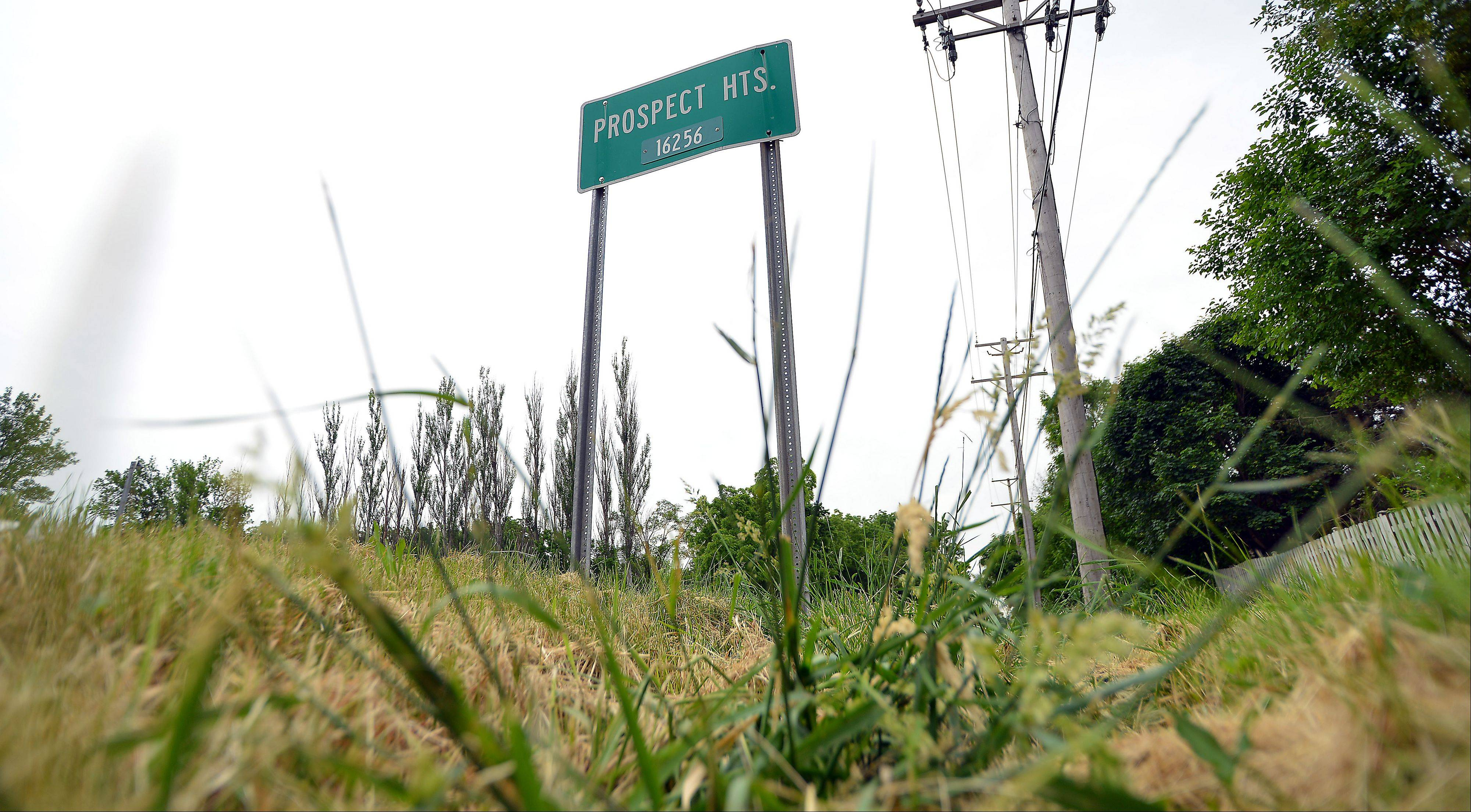 The Prospect Heights city council agreed this week to hire seasonal help for public works. Overgrown grass dominates the intersection near Hintz and Schoenbeck roads in Prospect Heights.
