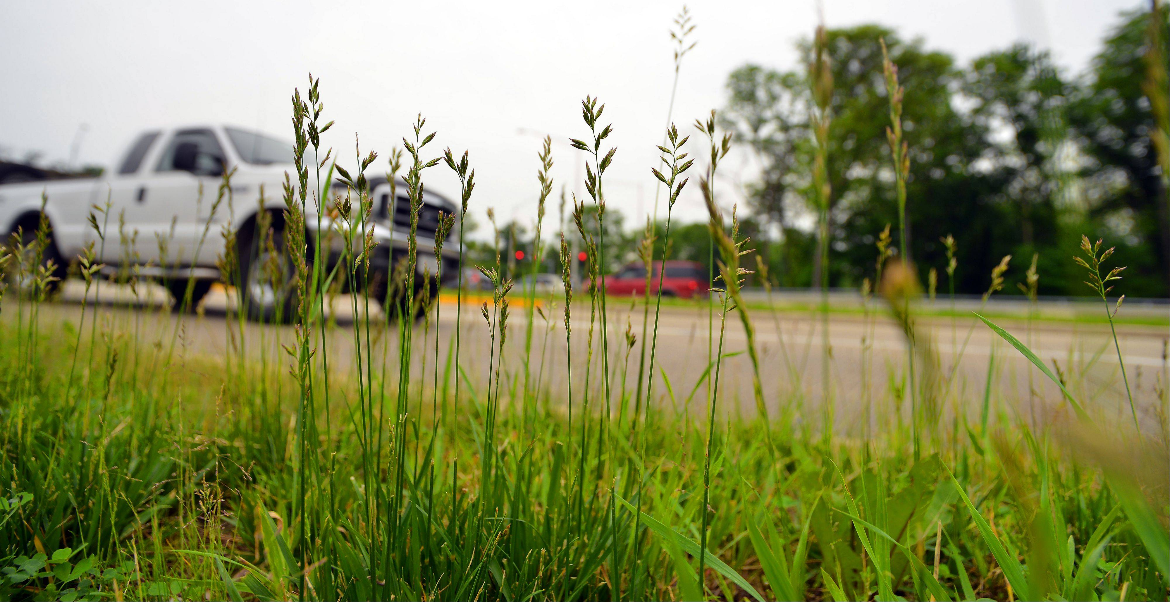 Prospect Heights officials agreed this week to hire seasonal help in an effort to combat unkempt grass, like the intersection around River Road and Milwaukee Avenue.