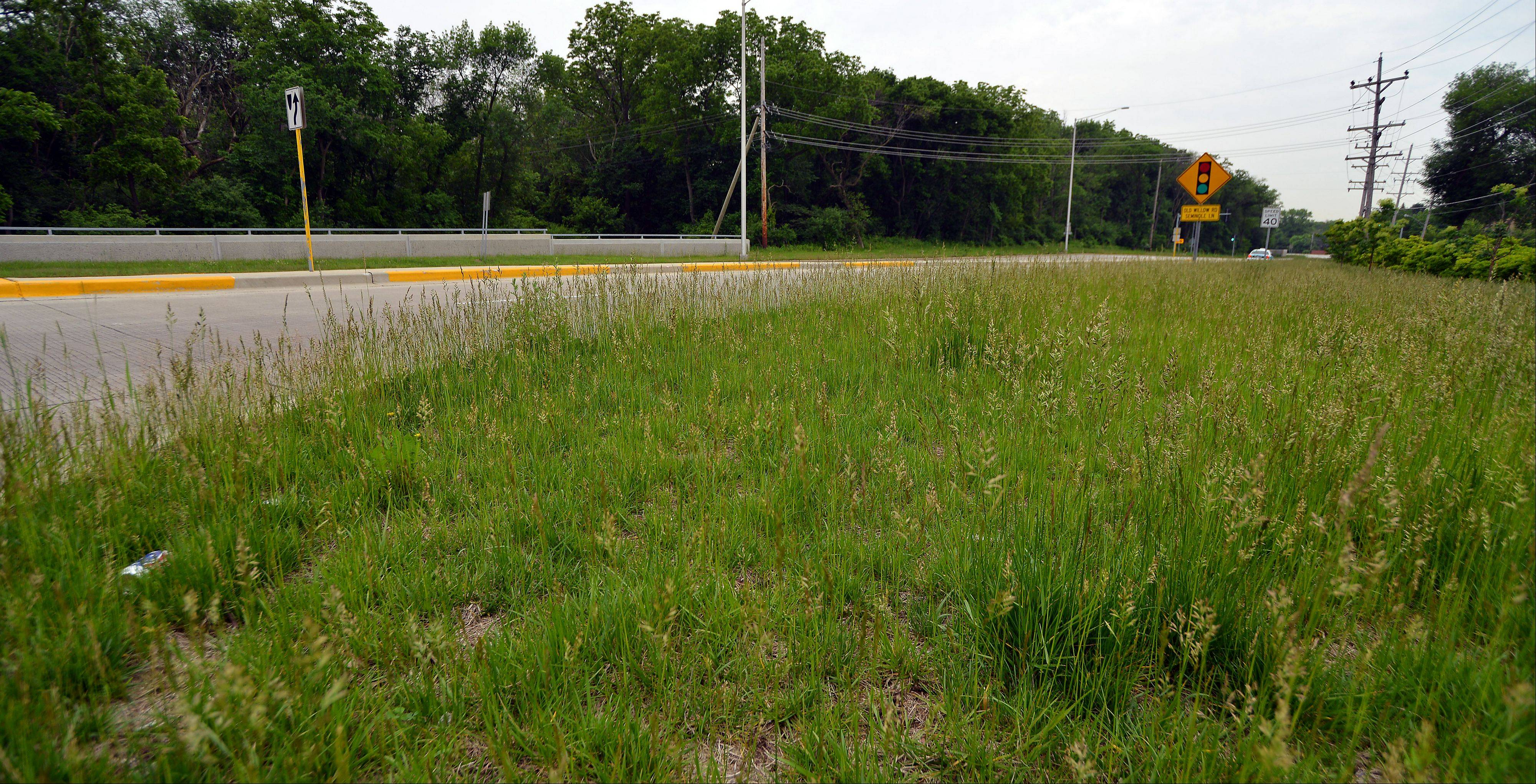 Overgrown grass dominates the intersection around River Road and Milwaukee Avenue in Prospect Heights. City officials this week voted to hire seasonal workers to help public works employees keep up with mowing.