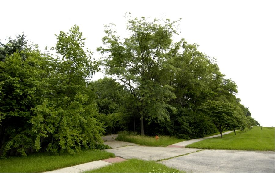 Trees block the view of the site that would house the proposed Irshad Learning Center along 75th Street near Naperville. The DuPage County Board on Tuesday delayed a vote on whether to allow the center to open in the residential neighborhood.