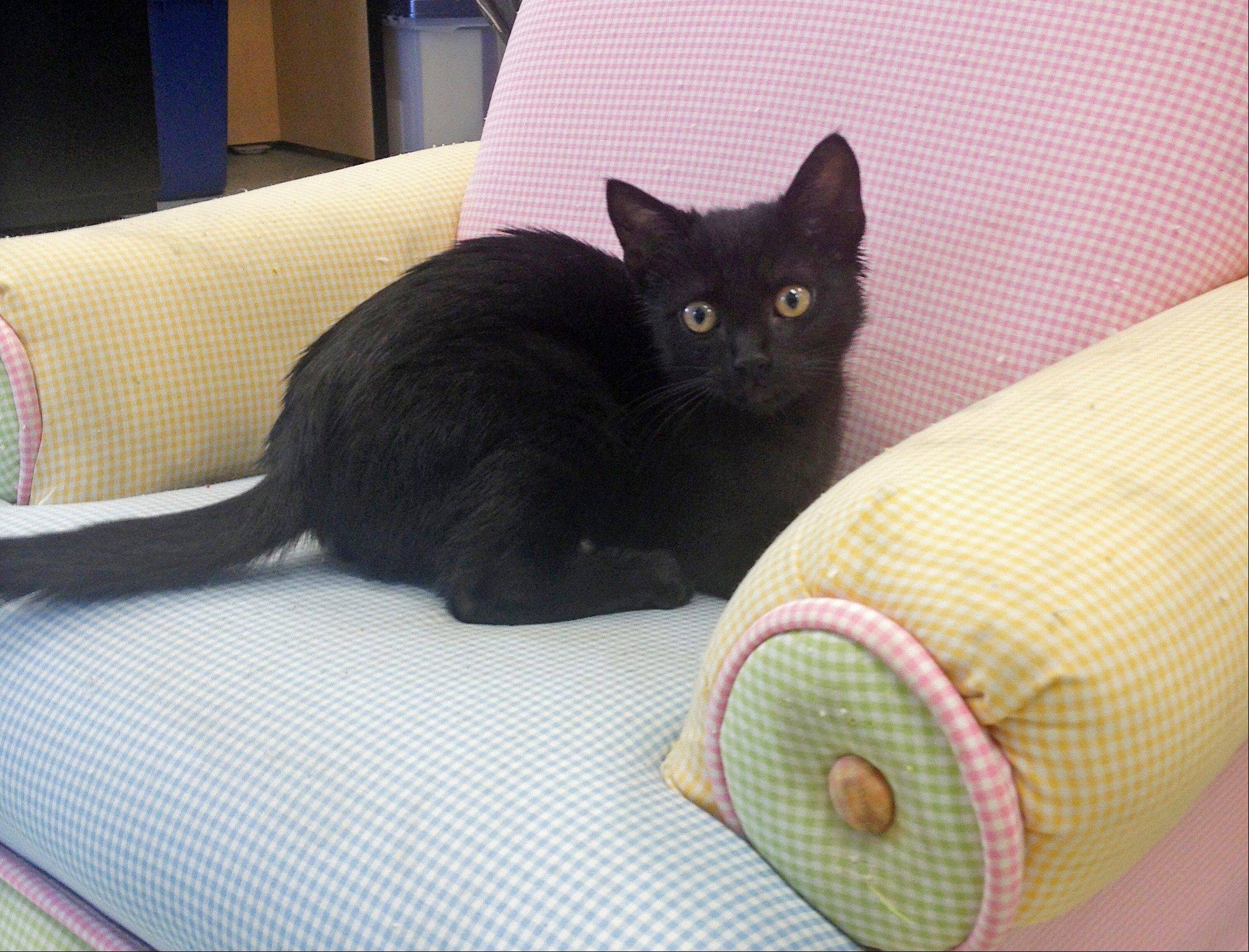 This black kitten, named �EB,� short for �engine block,� survived a 300-mile journey inside a semitrailer truck�s air cleaner.