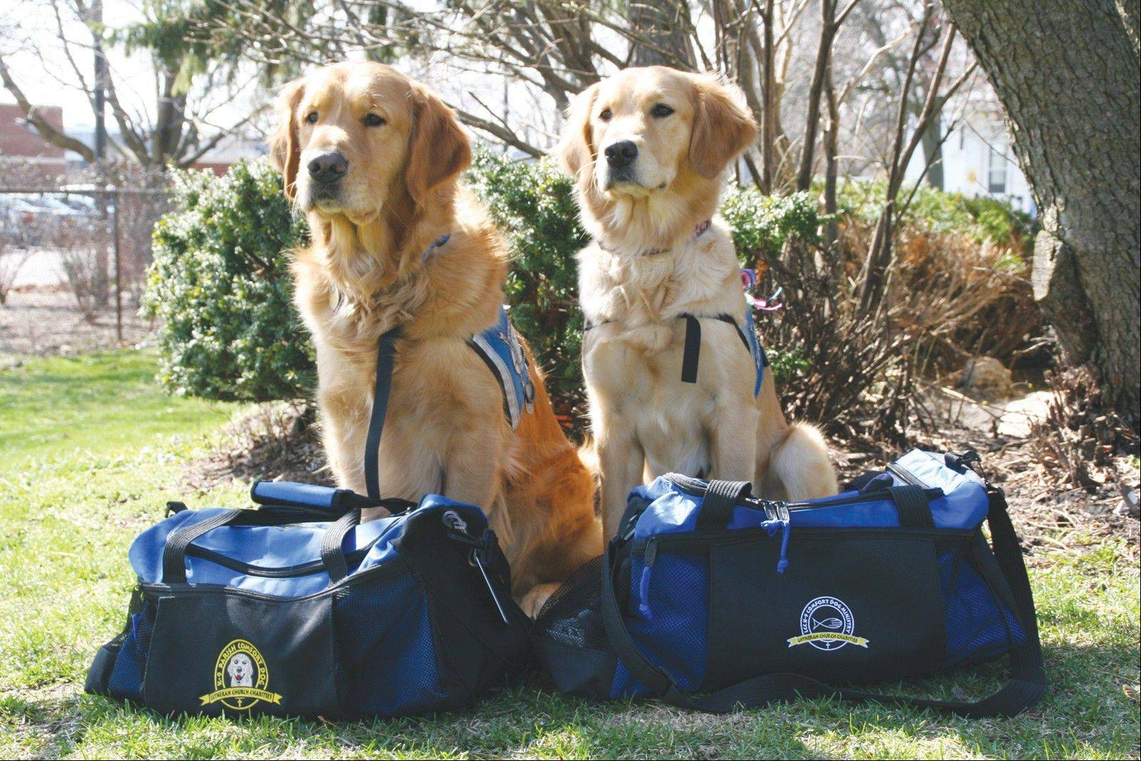LCC K-9 dogs Luther and Ruthie with bags packed and Boston bound.