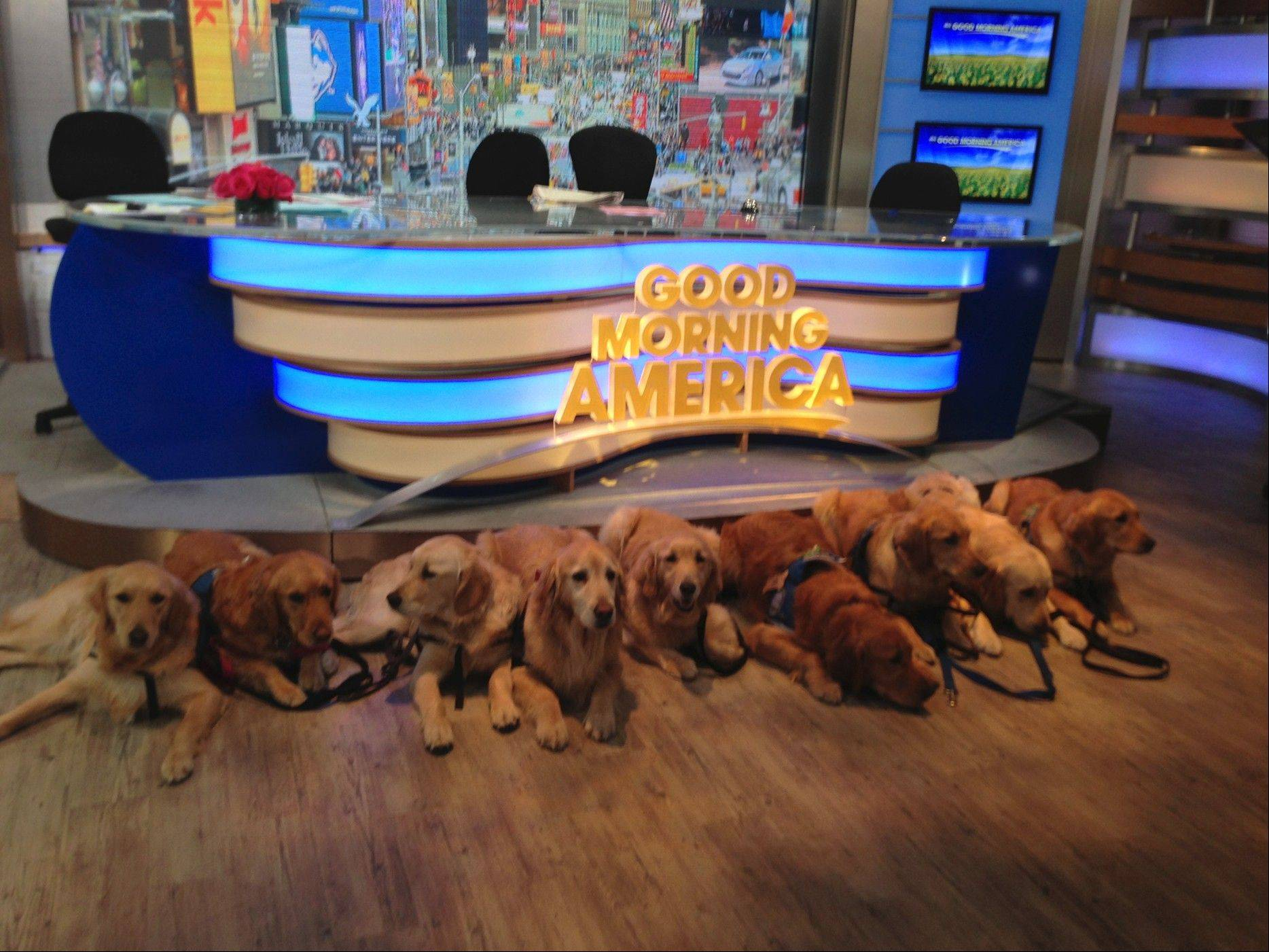 "Lutheran Church Charities K-9 Comfort Dogs were recently featured on ""Good Morning America."" From left: Addie, Kye, Isiah, Ladel, Shami, Luther, Hannah, Moses and Ruthie."