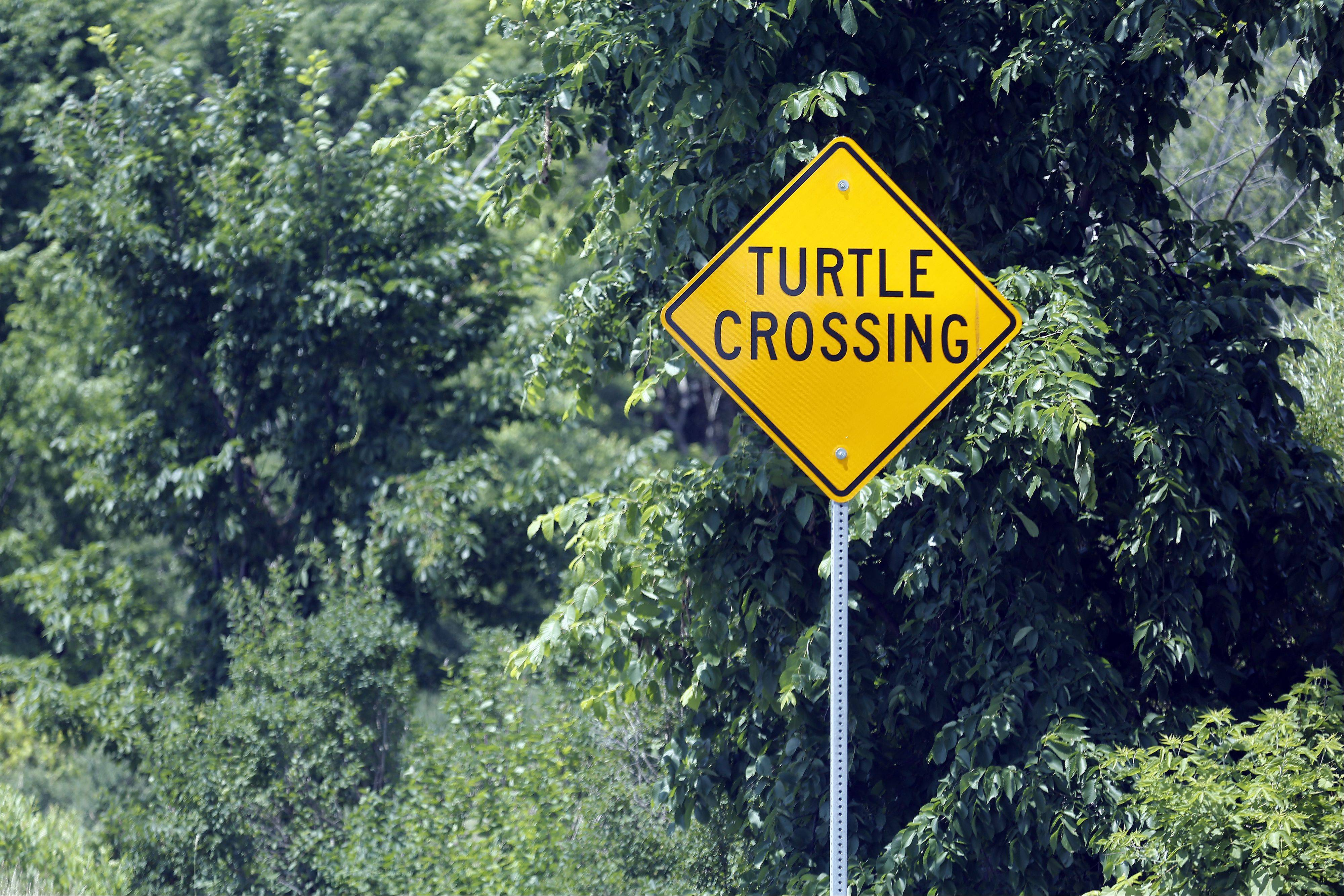 A sign along Algonquin Road, just west of Randall Road, shows where turtles like to cross the road.