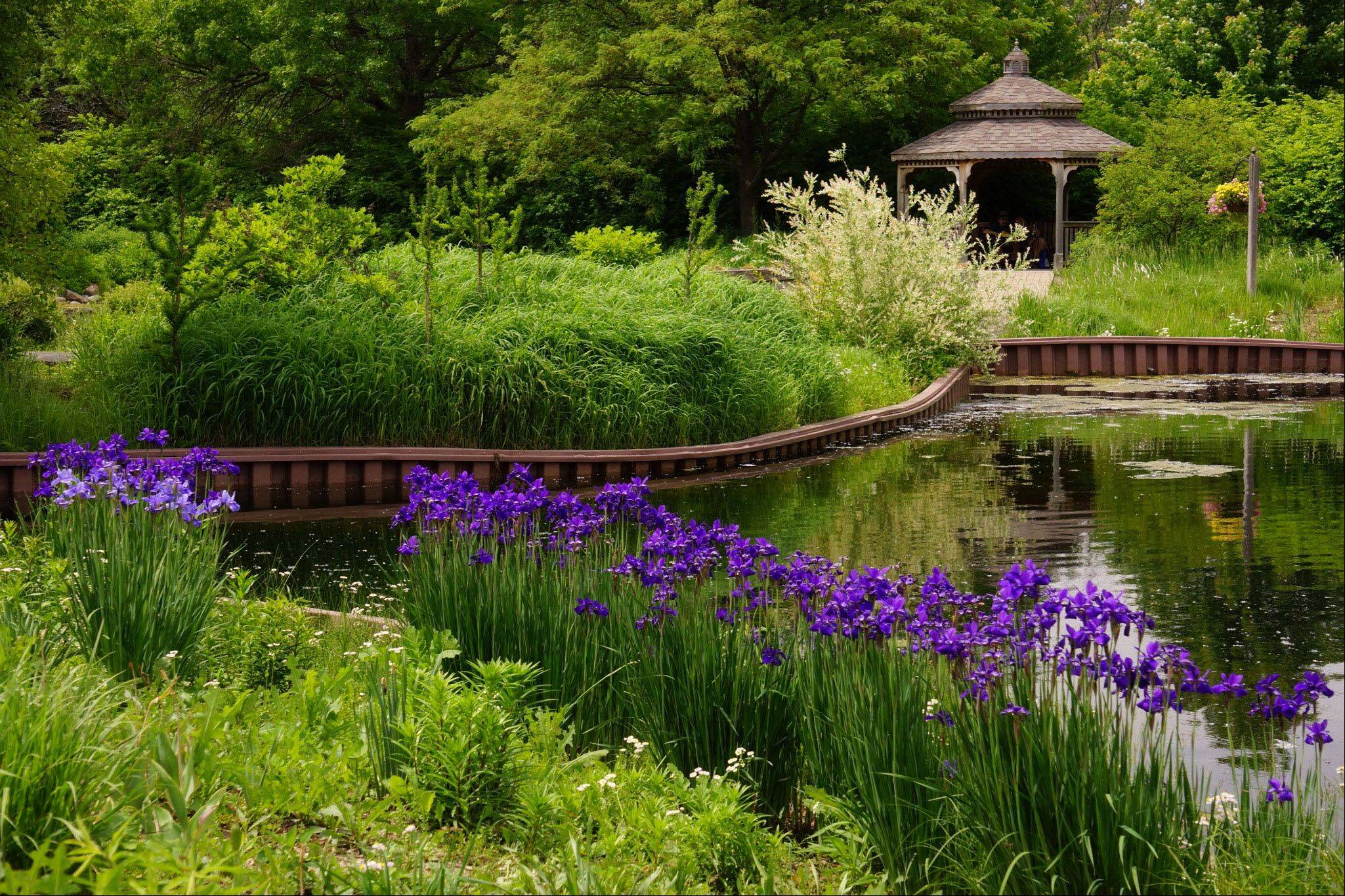 While I was on a summer trip to Cantigny Gardens in Wheaton these foreground irises and the grasses lining the pond led my eye to the inviting gazebo in the distance. I just wanted to sit under its canopy, relax, and enjoy the sights and sounds of nature for a while.