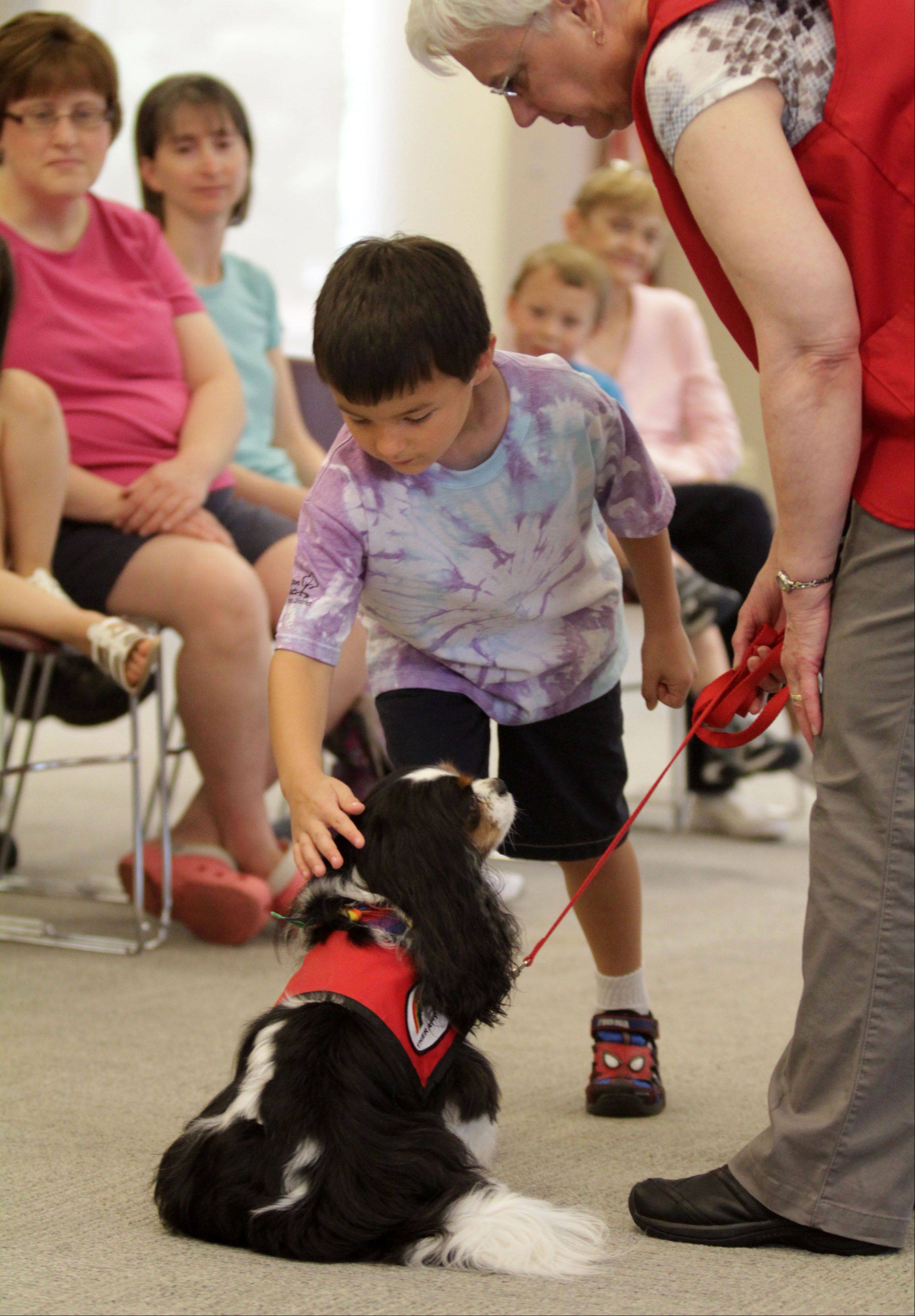 Susan Burrows, program coordinator with Rainbow Animal Assisted Therapy, shows Mark Chambers, 5, of Arlington Heights how to properly pet Abby, a Cavalier King Charles spaniel.