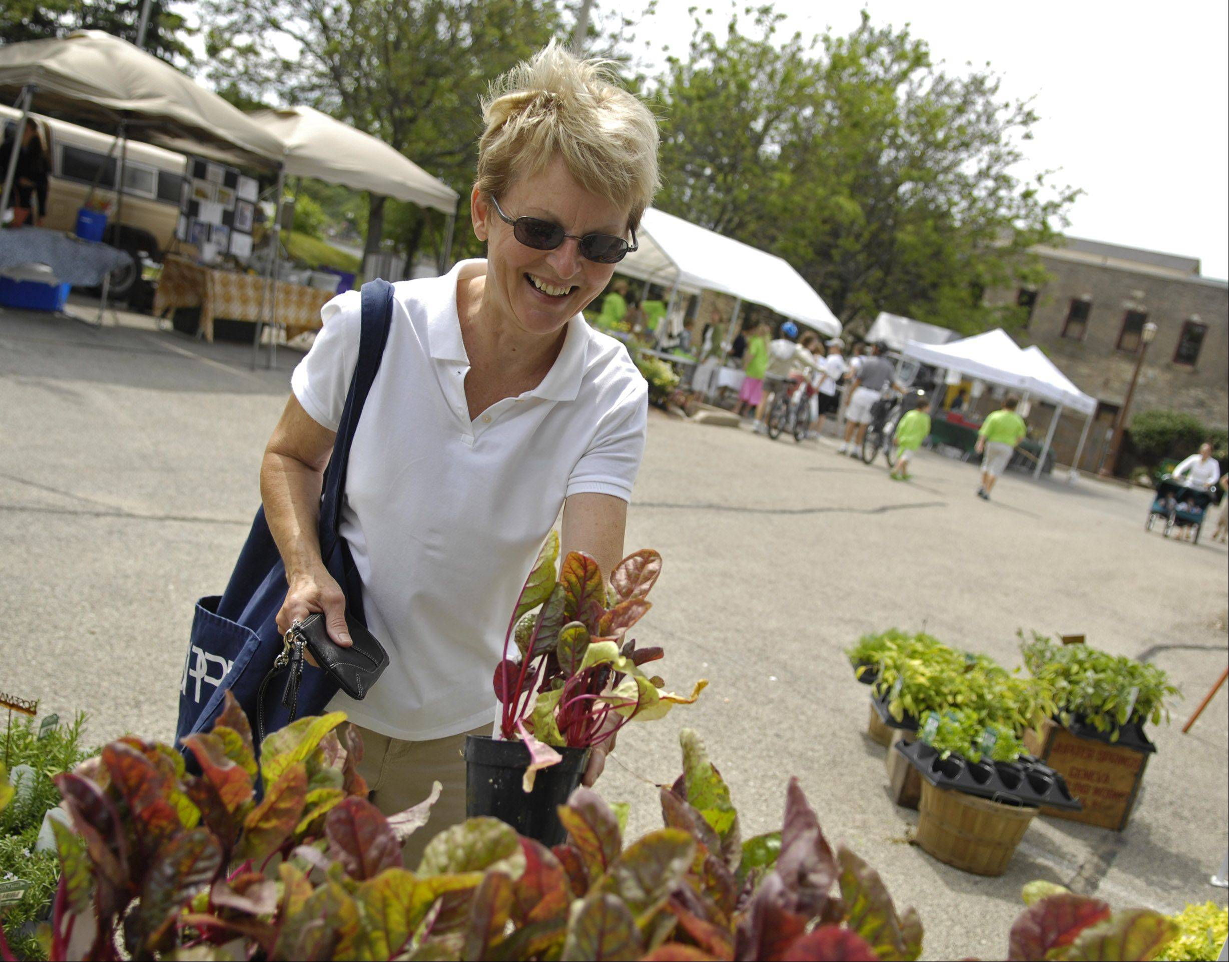 A shopper picks out a Swiss chard plant at the Geneva Green Market at its former location off River Lane.