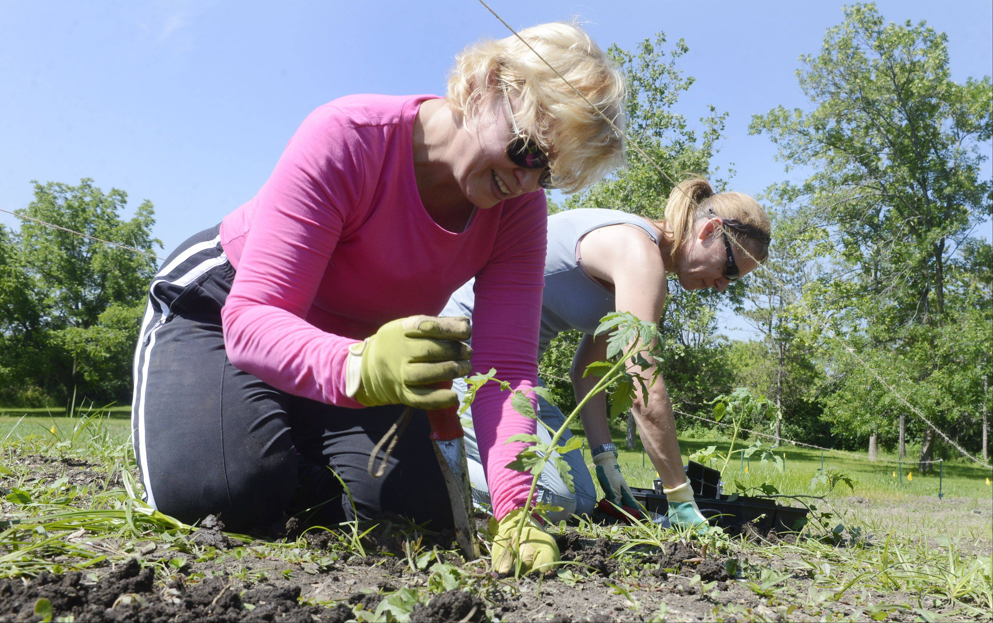 Sandra Aussem of Palatine, left, and Kim Firth, of Carpentersville plant tomatoes in the Willow Creek Community Church garden.