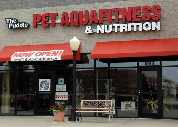 A swimming pool and spa for your four legged friend the puddle pet aquafitness and nutrition recently opened in south elgin offering swim sessions for solutioingenieria Image collections