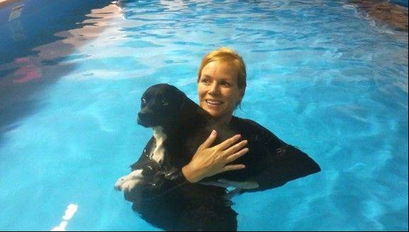 Your furry friend can beat the heat of the dog days of summer and cool off with a supervised dip in the pool at The Puddle Pet AquaFitness and Nutrition in South Elgin.