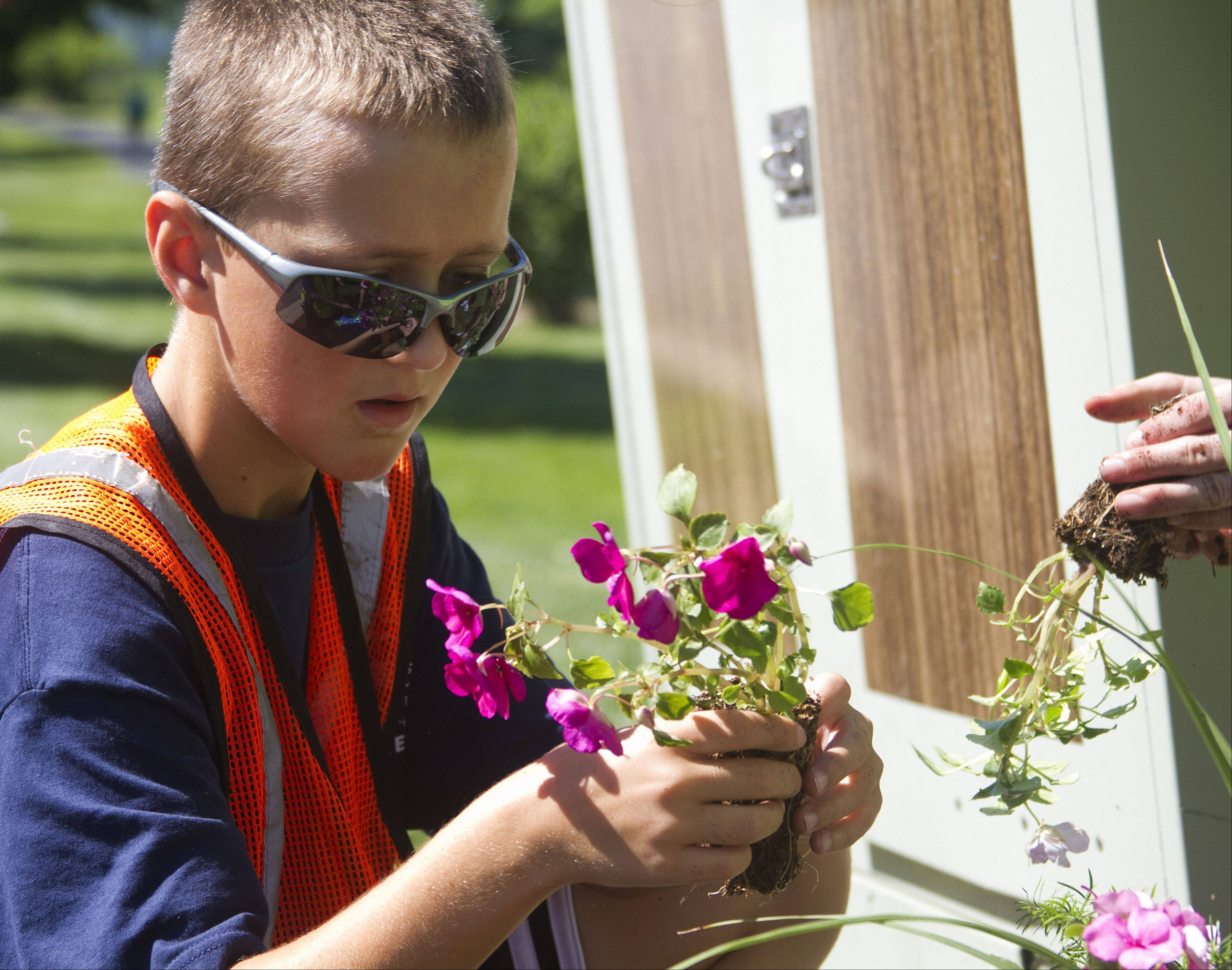 Jack Mallett, 11, of Naperville, helps plant flowers and ferns Friday at Wildflower Park in Naperville. He participated in a weeklong volunteer camp that introduced middle school students to community service.