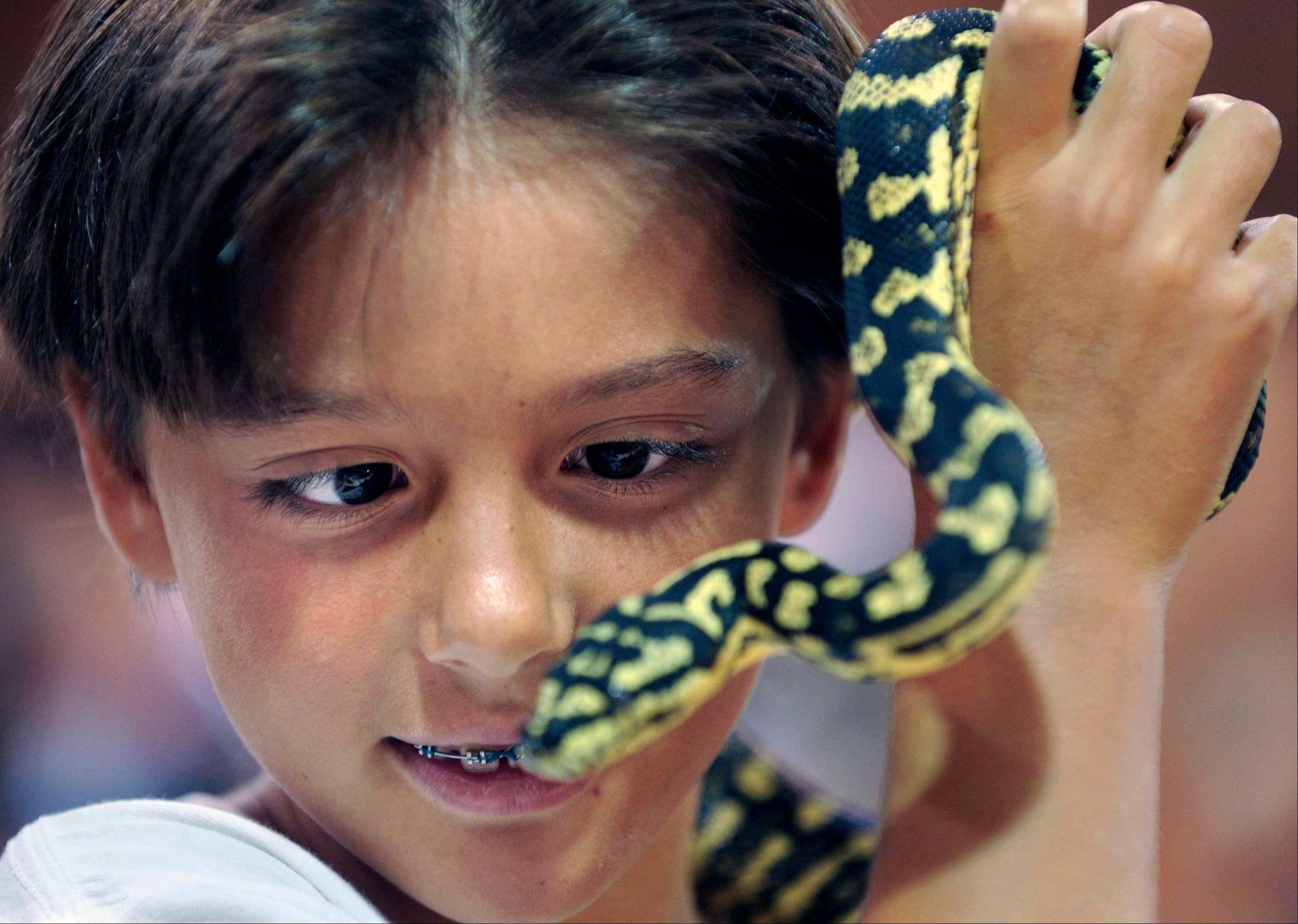 Get a close look at snakes, lizards, turtles and other exotic pets this weekend in St. Charles, when Repticon returns to the Kane County Fairgrounds.