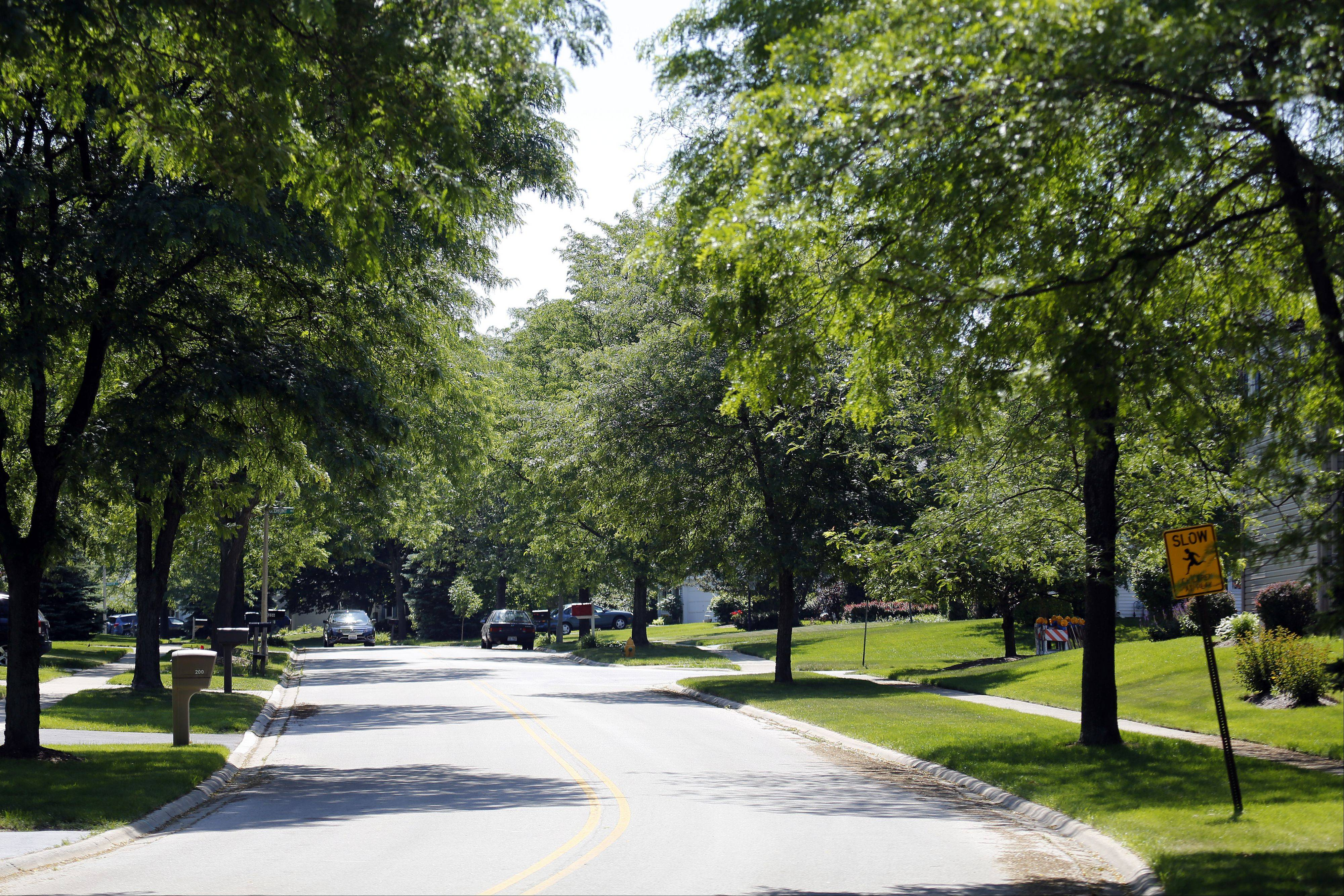 The mature trees along Foxmoor Road add to the quiet, secluded atmosphere of the Foxmoor neighborhood.