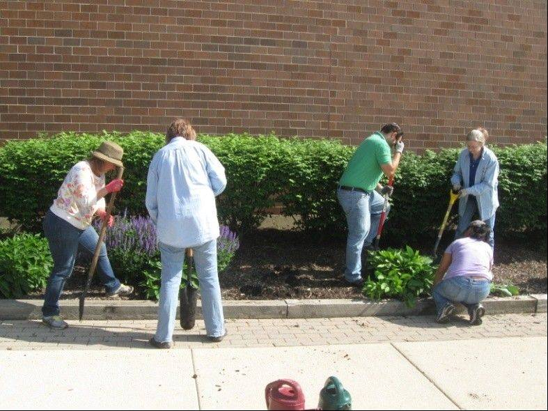 Members of Roselle Park District Garden Club & employees/board members of the Roselle Public Library work together to plant new flowers outside of the library.