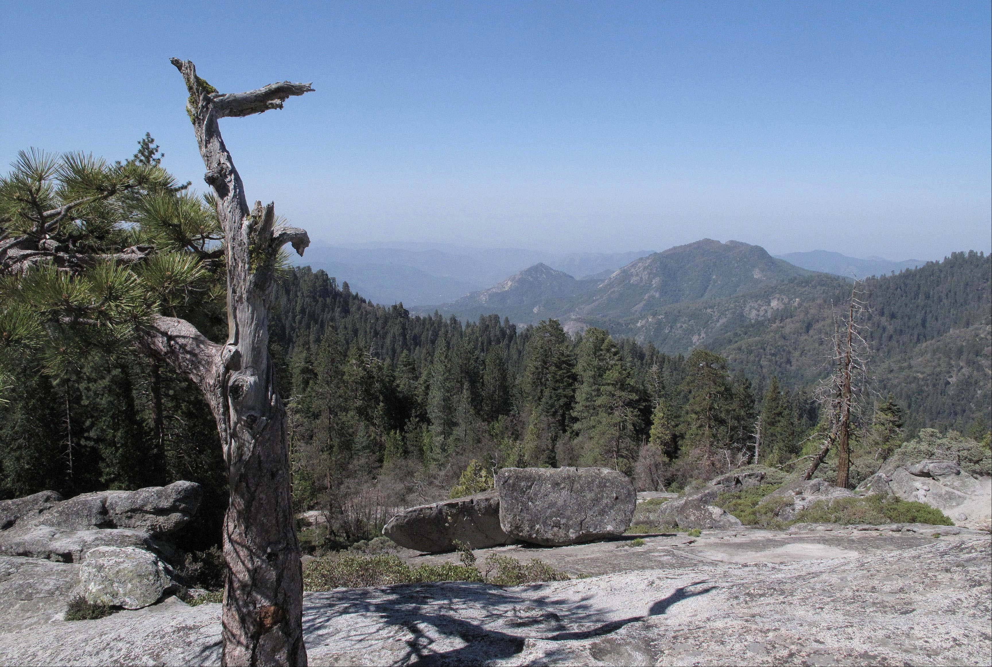 The view from Beetle Rock in Sequoia National Park, Calif., is seen. In parts of California�s Sierra Nevada, the incursion of trees is sucking marshy meadows dry. Glaciers are melting into mere ice fields. Wildflowers are blooming earlier. And the optimal temperature zone for Giant Sequoias is predicted to rise several thousand feet higher, leaving existing trees at risk of dying over the next 100 years.