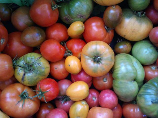 A variety of heirloom tomatoes grown in Smart Farm's gardens during the 2012 grown season.