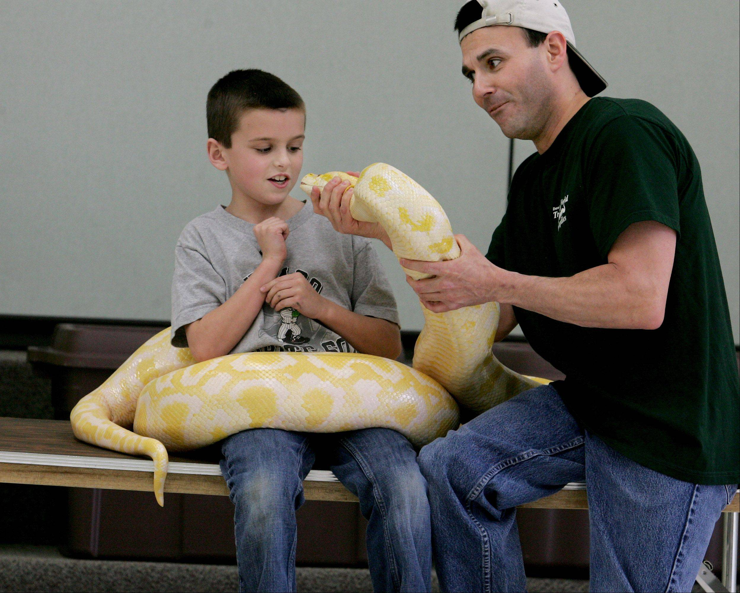 Dave DiNaso, helping an audience member get a good look at a Burmese python, brings his Traveling World of Reptiles to Lisle's Eyes to the Skies on Thursday as part of a lineup of animal shows in the children's area.
