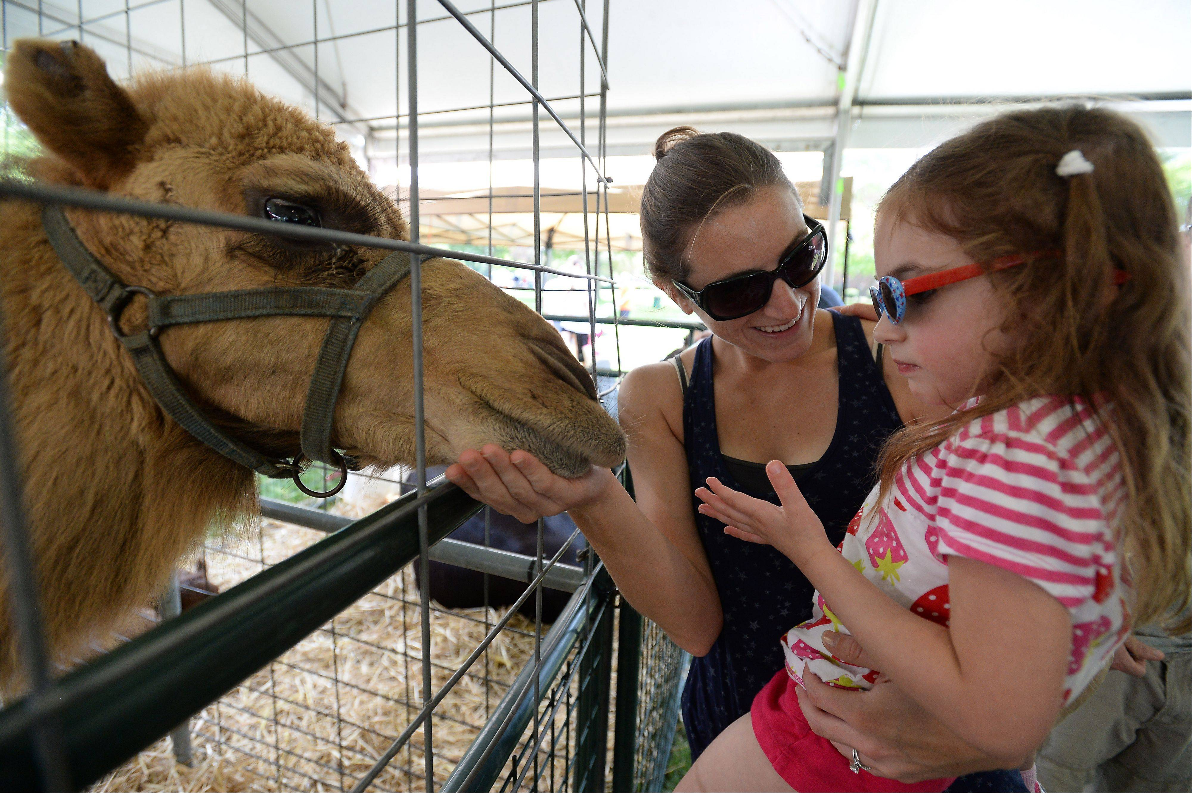 Frontier Days festivities kicks off on the Fourth of July with camel feeding at the petting zoo with Rebecca White and her niece Charlotte Brook, 3, both of Arlington Heights.