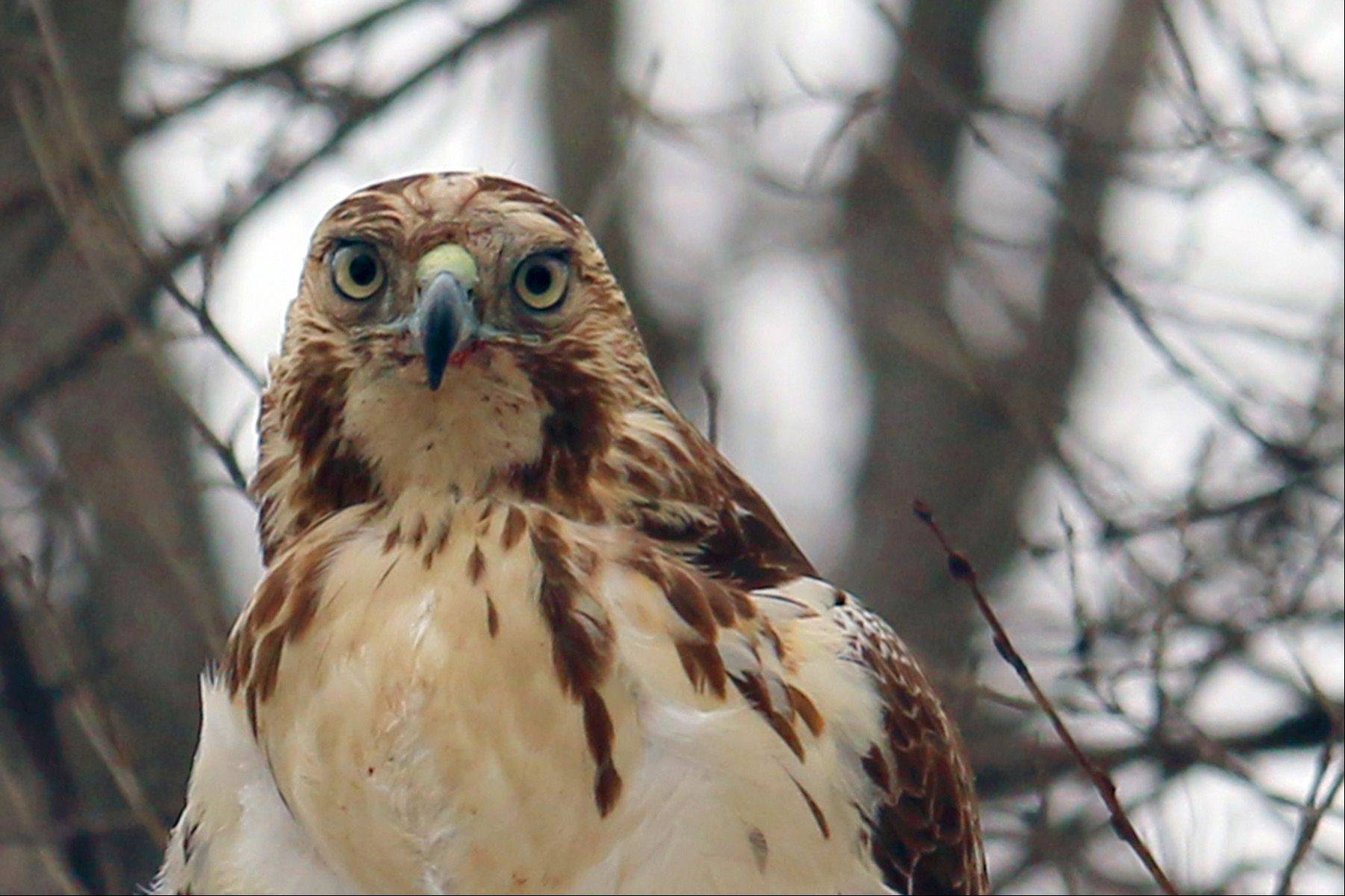 Up close and personal with a hawk.