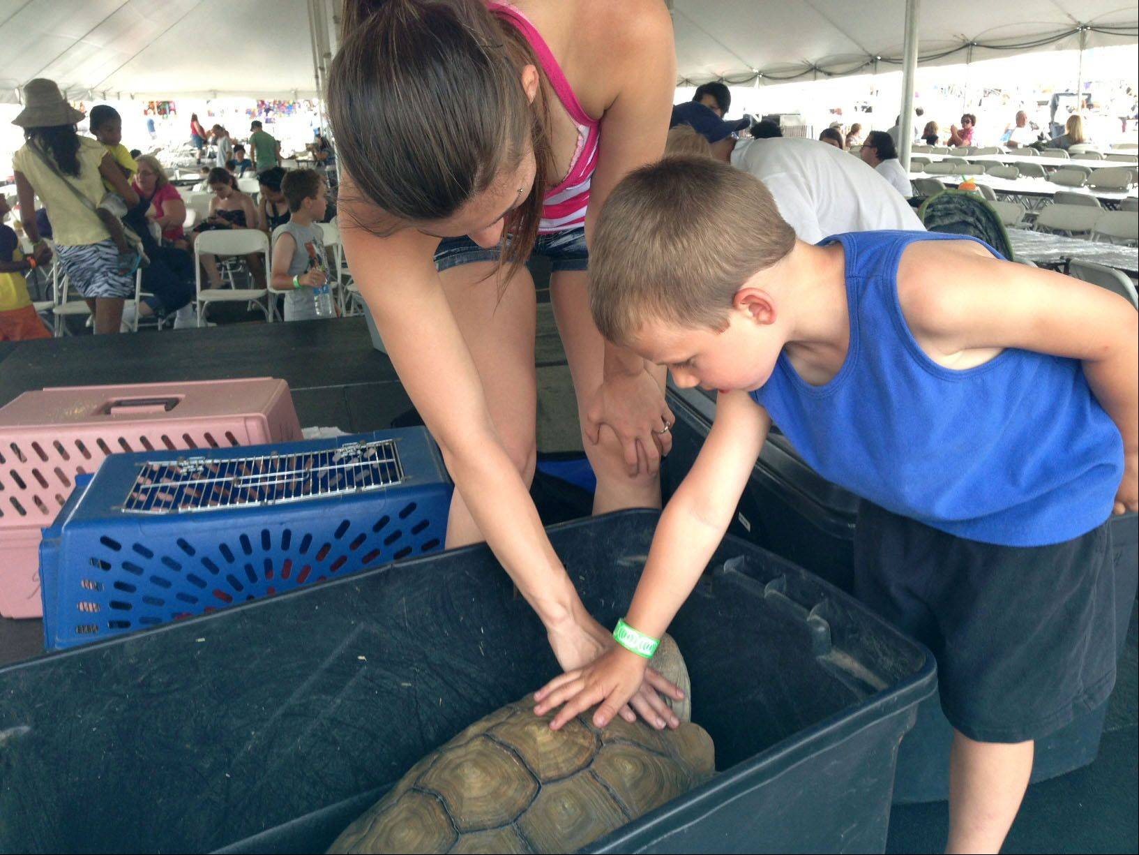 Matthew Pearson, 4, and his mother Tiffany Martin of Hoffman Estates get acquainted with a sulcata tortoise belonging to Animals for Awareness at Northwest Fourth-Fest Saturday at the Sears Centre Arena in Hoffman Estates.