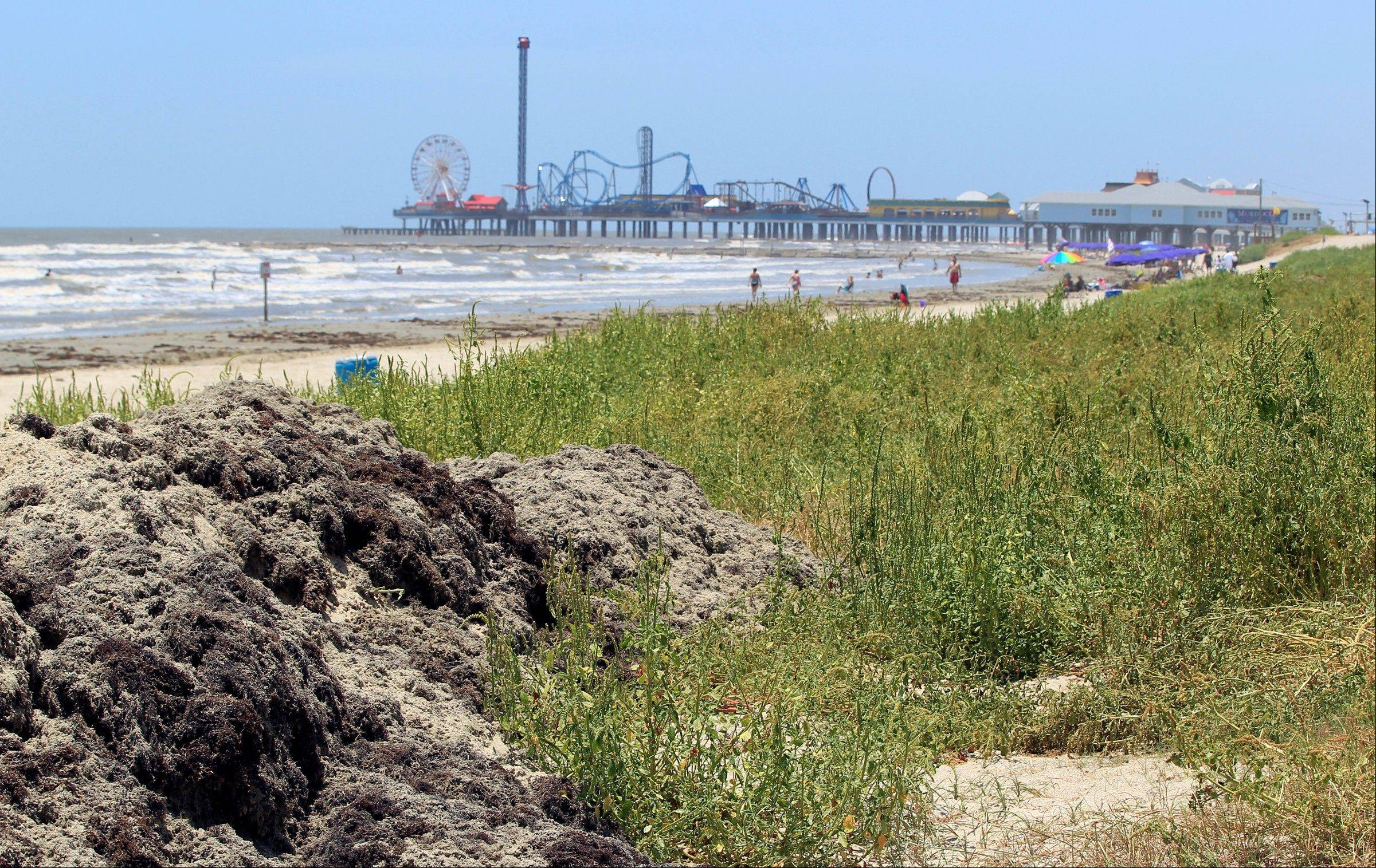 Seaweed scraped from the beach near 17th Street in Galveston, Texas, is piled into dunes where vegetation is already growing over decomposing seaweed. The Park Board of Trustees voted unanimously to support projects that will create ìseaweed-enhanced sand dunes on the island.