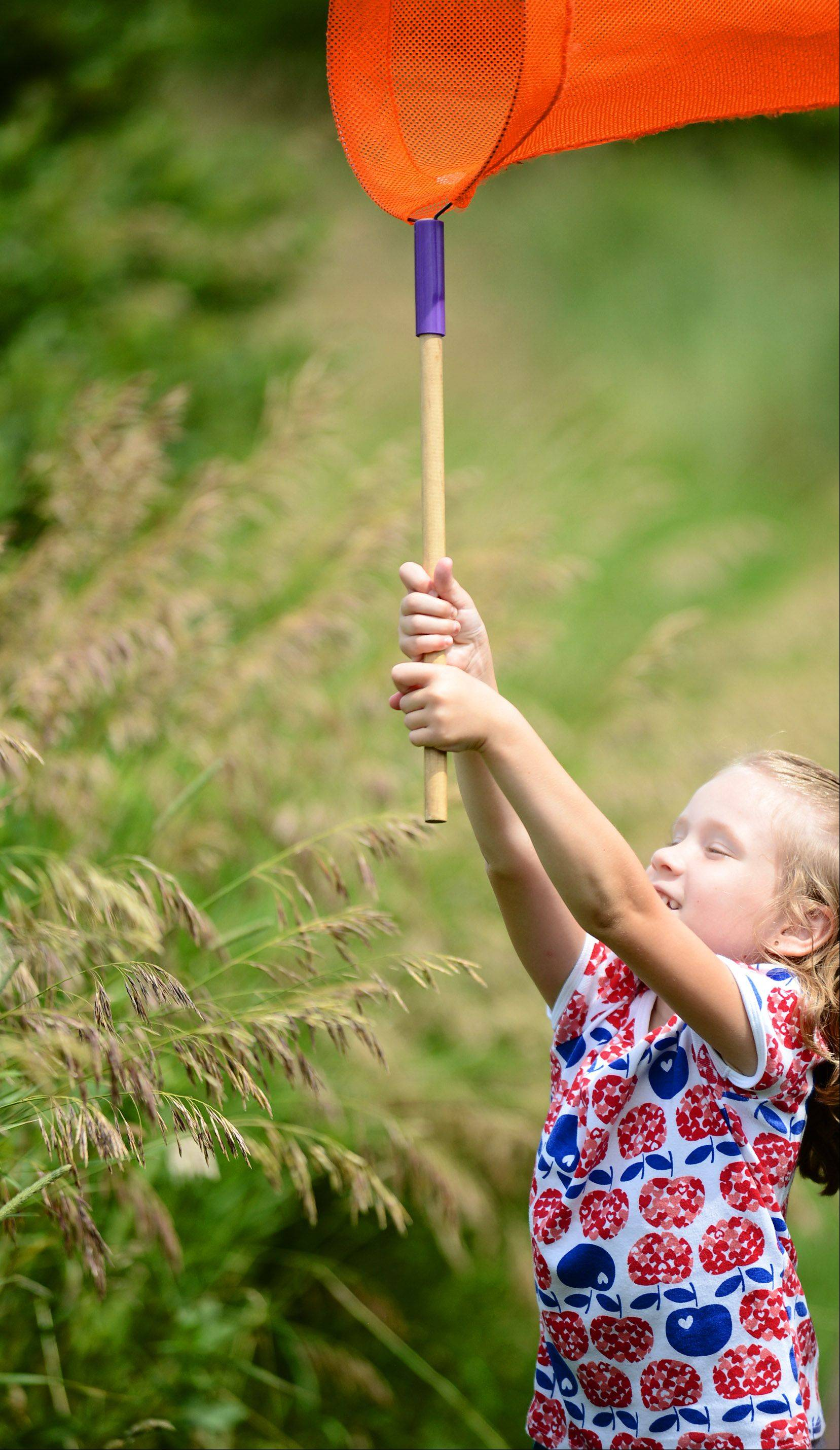 Grace Vanderheyden, 5, of Sugar Grove, runs to catch a butterfly at the Kane County Forest Preserve District's Prairie Butterflies event. The event was held at Dick Young Forest Preserve in Batavia on Saturday.