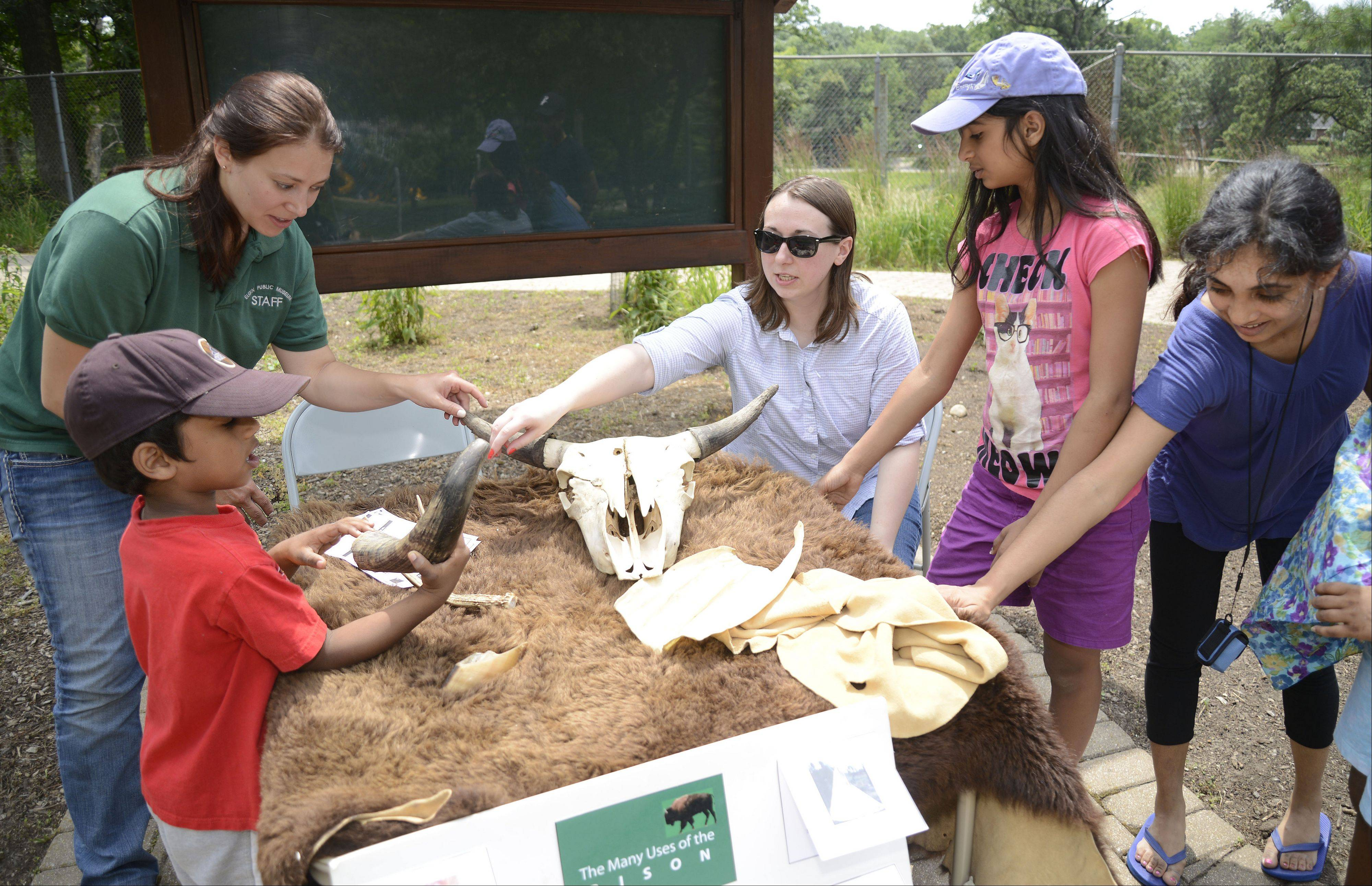 "Elgin Public Museum Education Coordinator, Sara Russell, left, and volunteer Forrest Schroeder-Einwiller, direct Nickolas Mathews, 5, his sister Rachel, 11, and mother, Shyla, to touch bison hides, horns and skulls at the ""Bison and Friends-Adventures in the Zoo"" at Lords Park Zoo in Elgin on Saturday. The Mathews family, who live in Elgin, were visiting the zoo for the first time."