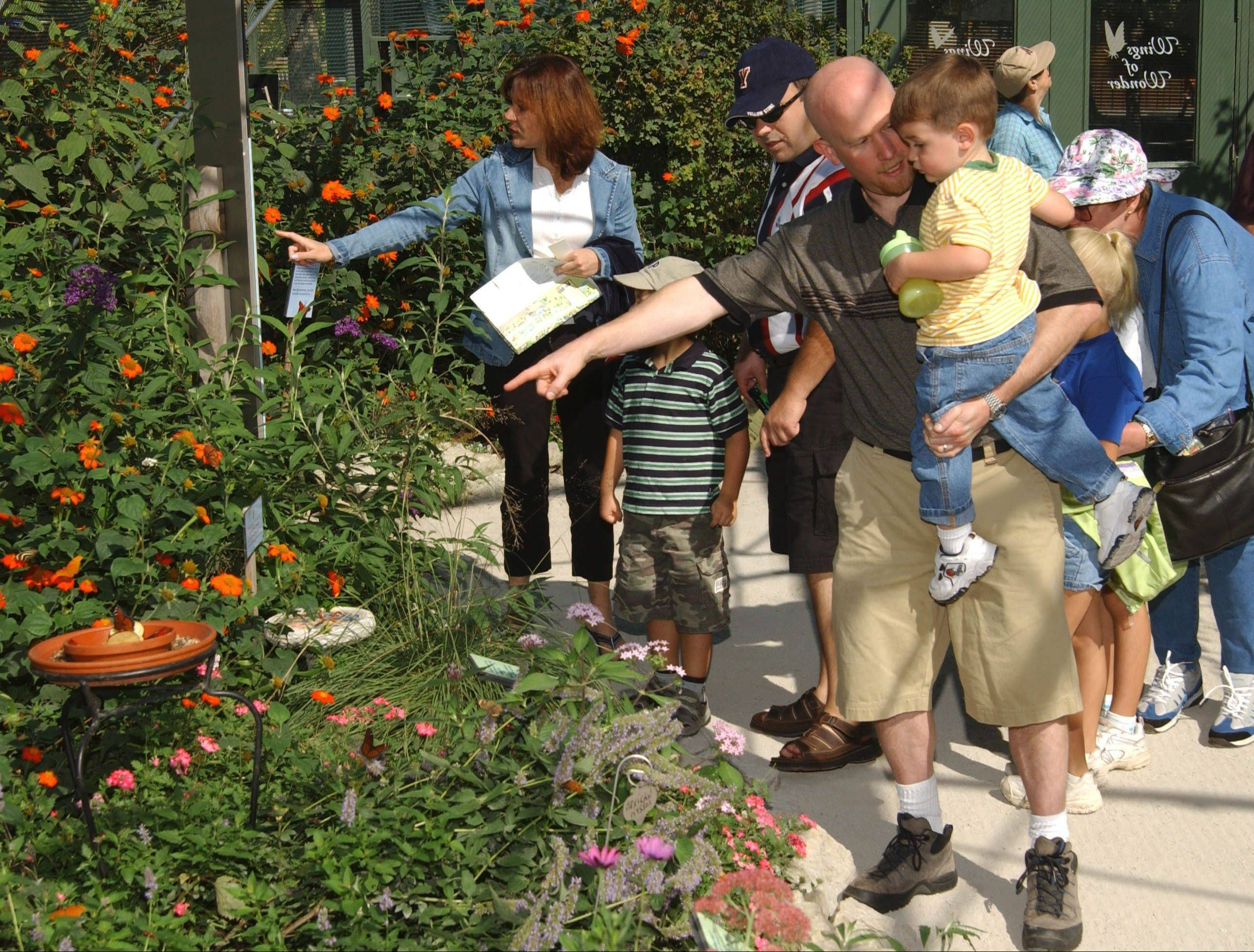 A group of visitors notice butterflies in the garden of the Brookfield Zoo's Butterflies Exhibit. The exhibit, open through Labor Day, gives zoo-goers the opportunity to view up to 18 different North American species.