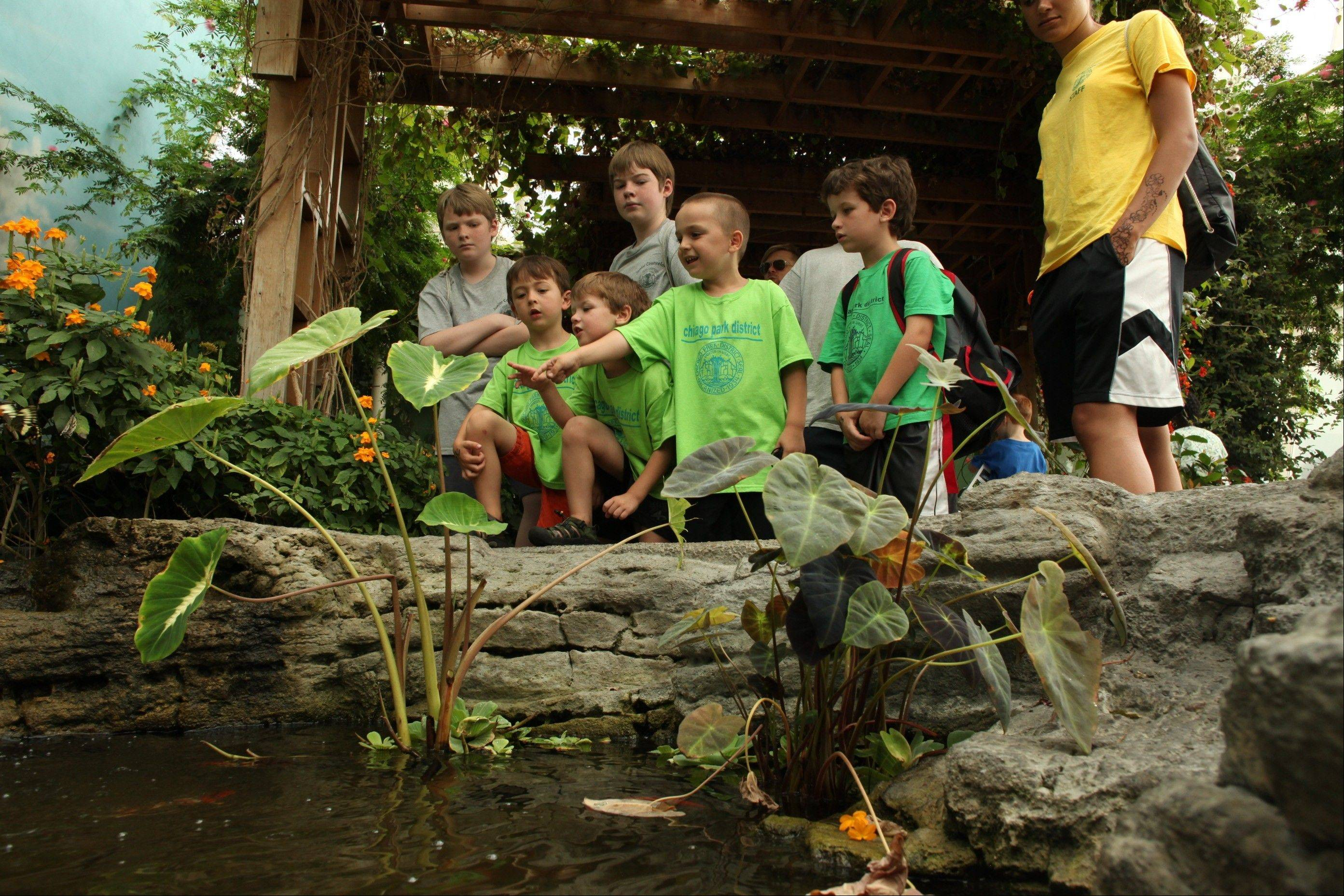 Kids observe what The Peggy Notebaert Nature Museum's Butterfly Haven has to offer. The haven, open year-round, offers visitors an up-close opportunity to view more than 50 species of butterflies from around the world.