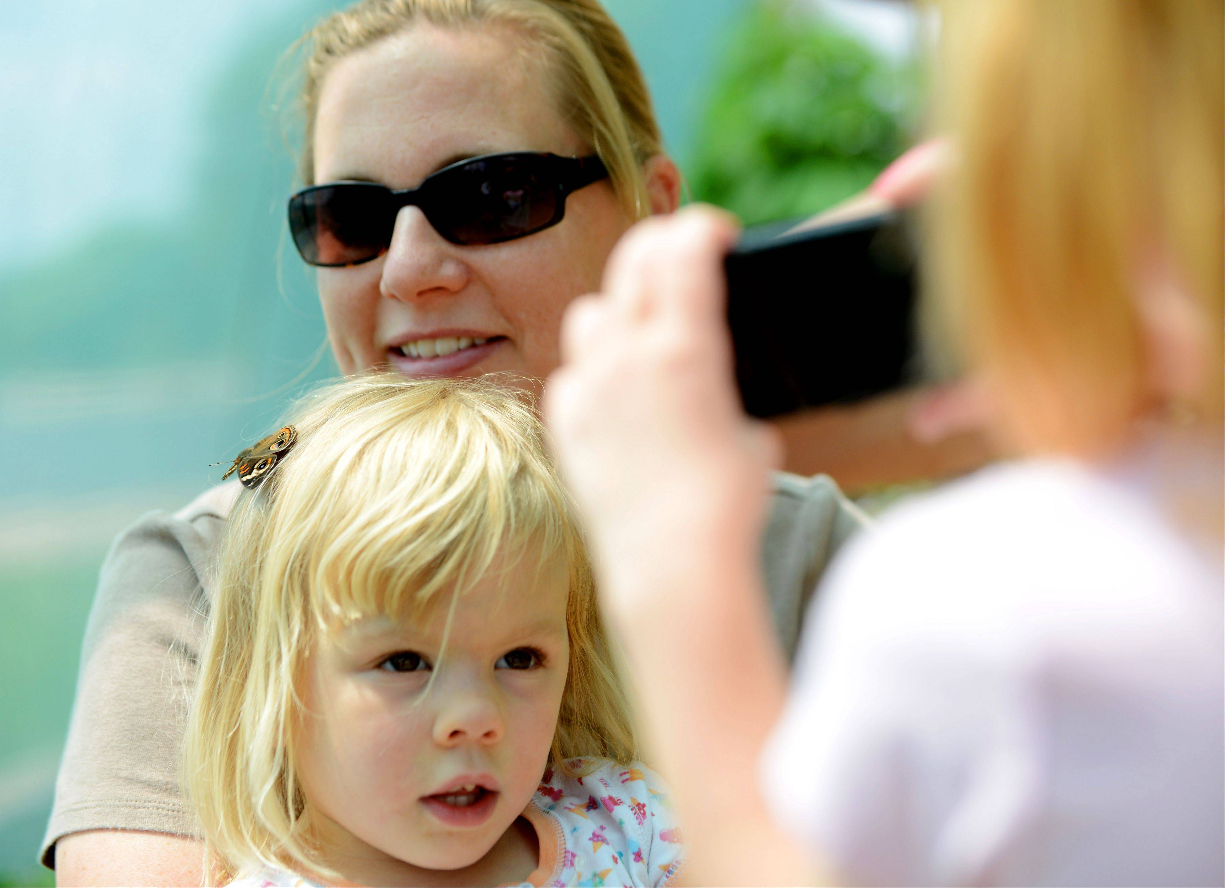 A butterfly perched on the head of Brooke Banowetz, 3, of Naperville prompts sister Grace, 6, to take a picture of her and mom, Jen, at the Peck Farm Park Butterfly House in Geneva.