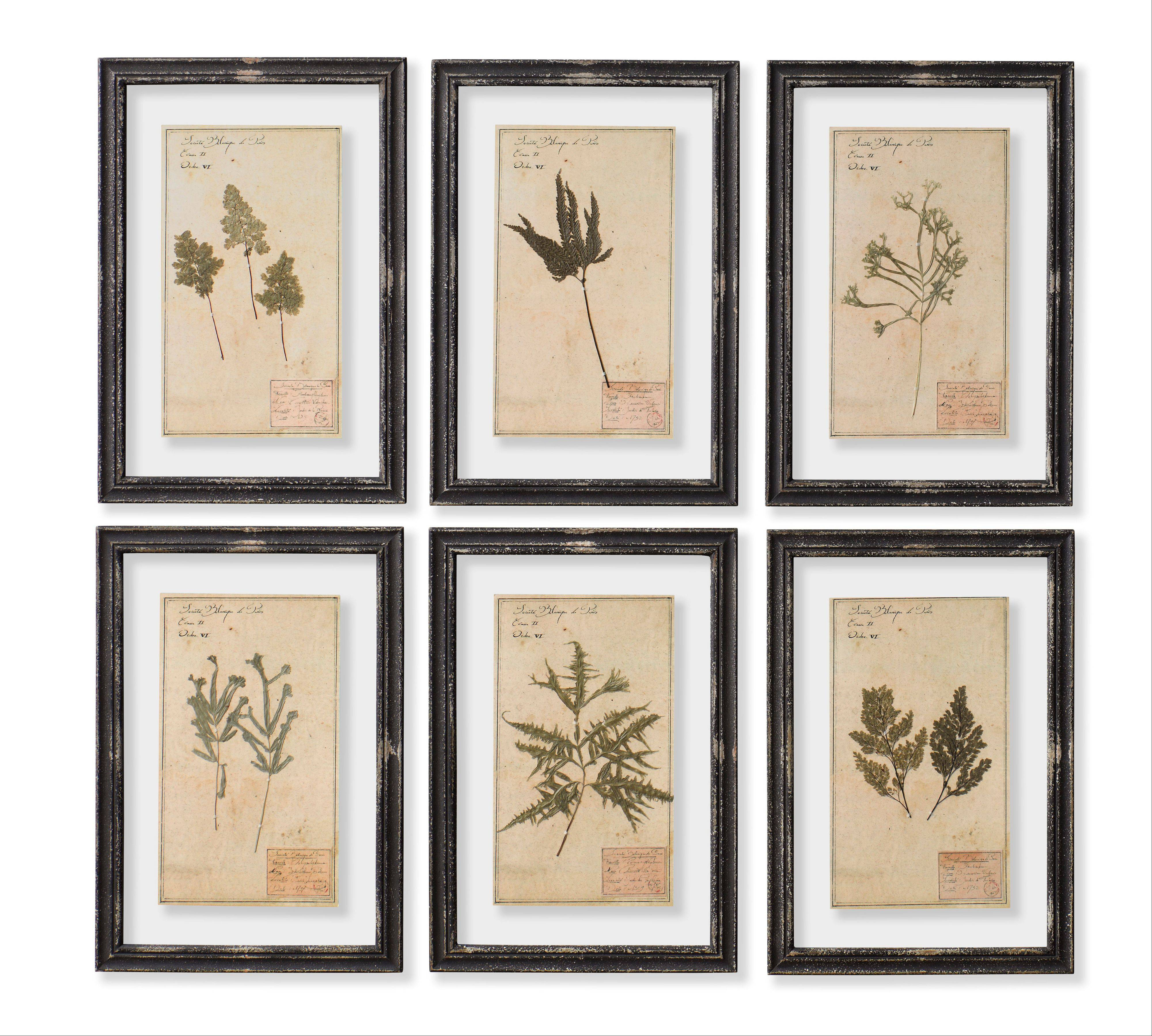 Nineteenth century framed herbarium prints mounted under glass from Restoration Hardware.