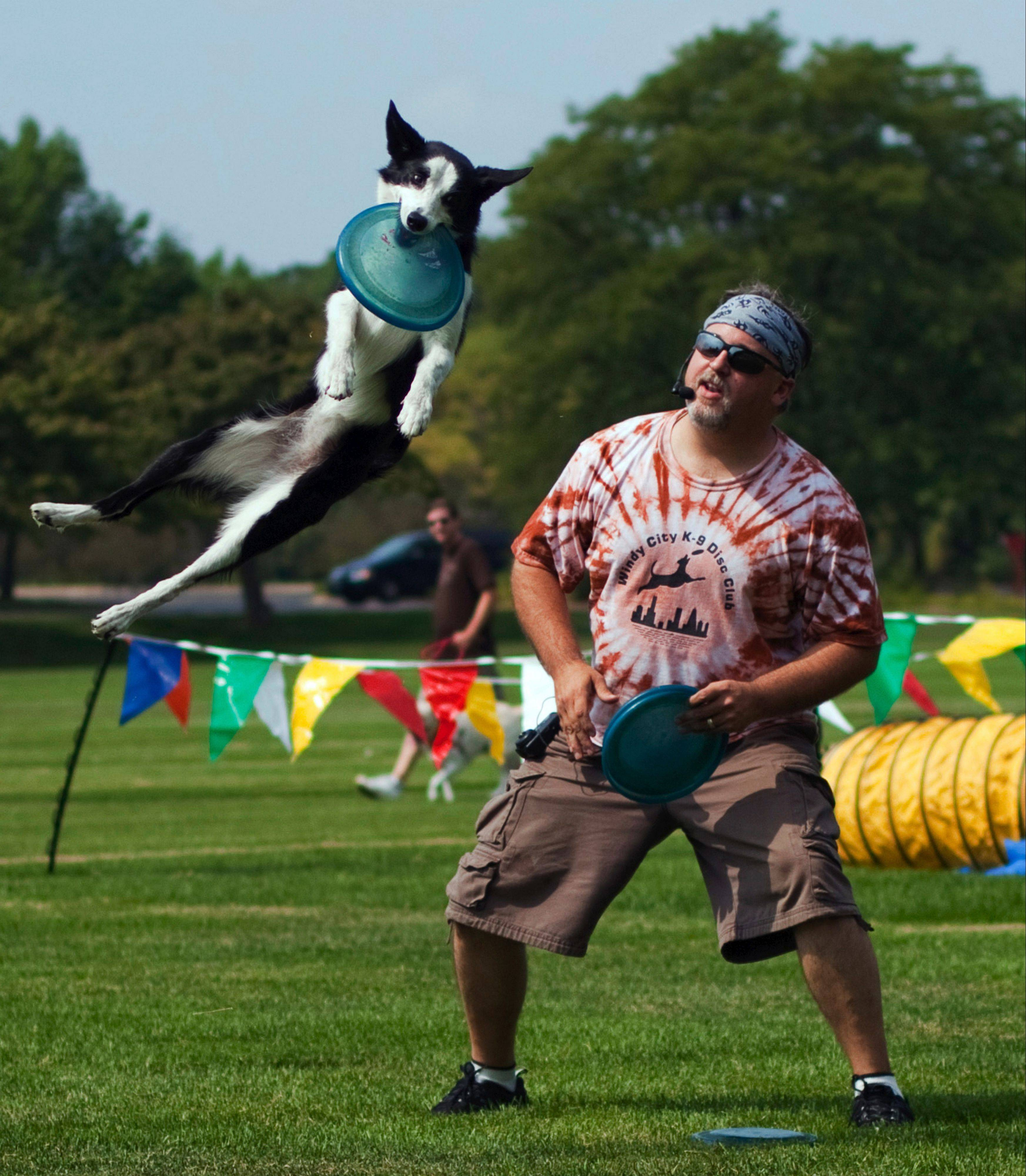 Cantigny Park hosts Dog Days on Aug. 3 at the Parade Field.