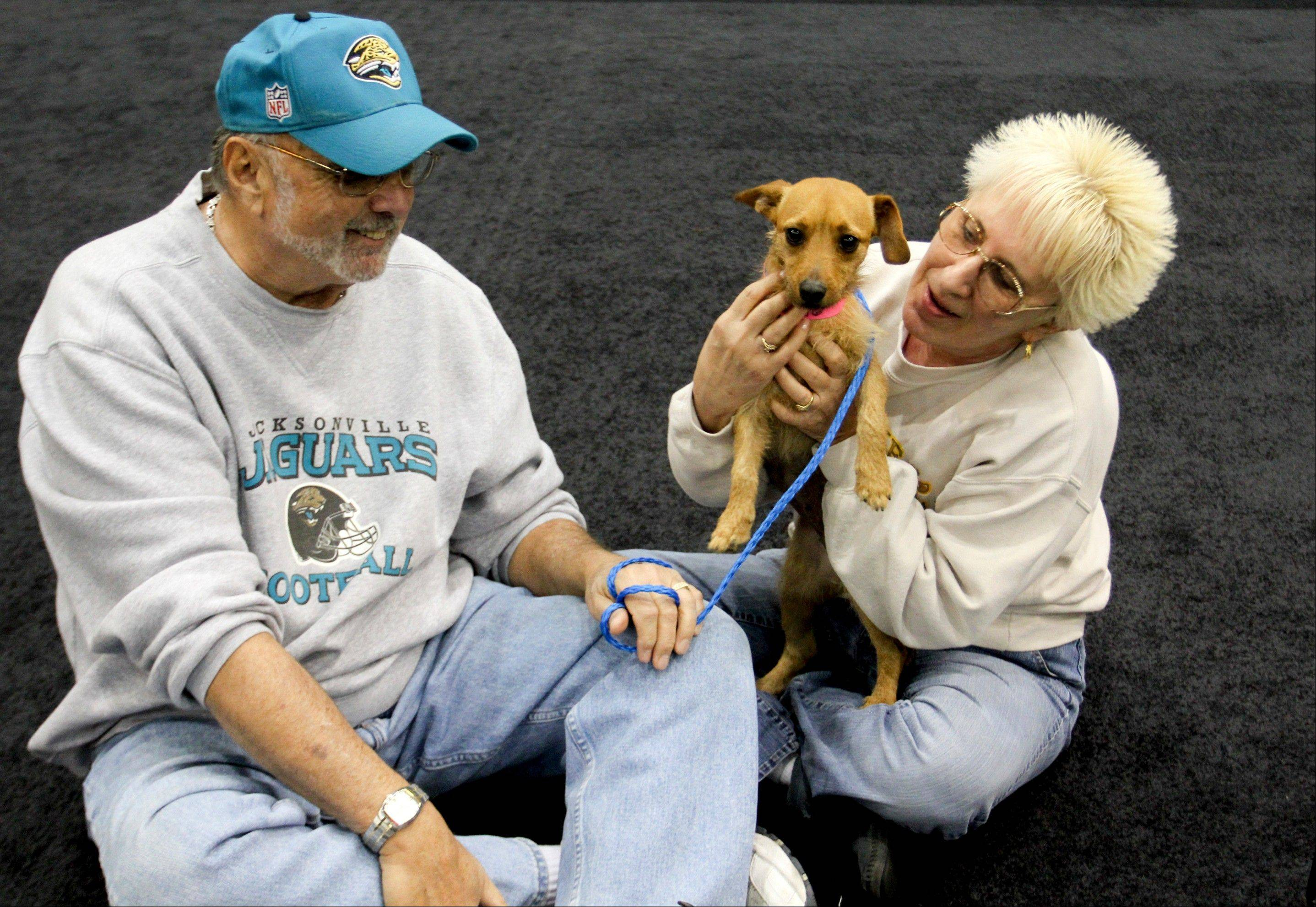 MGM Grand poker dealer Dar Reike holds her adopted dog, Alexia, next to her husband, Rick Reike. They adopted the dog, at a company adoption fair last year. However, they decided against getting pet insurance.