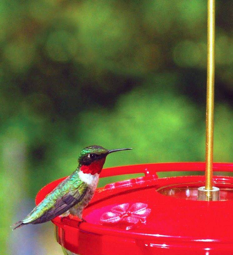 Provide feeders so hummingbirds have a constant source of nectar.