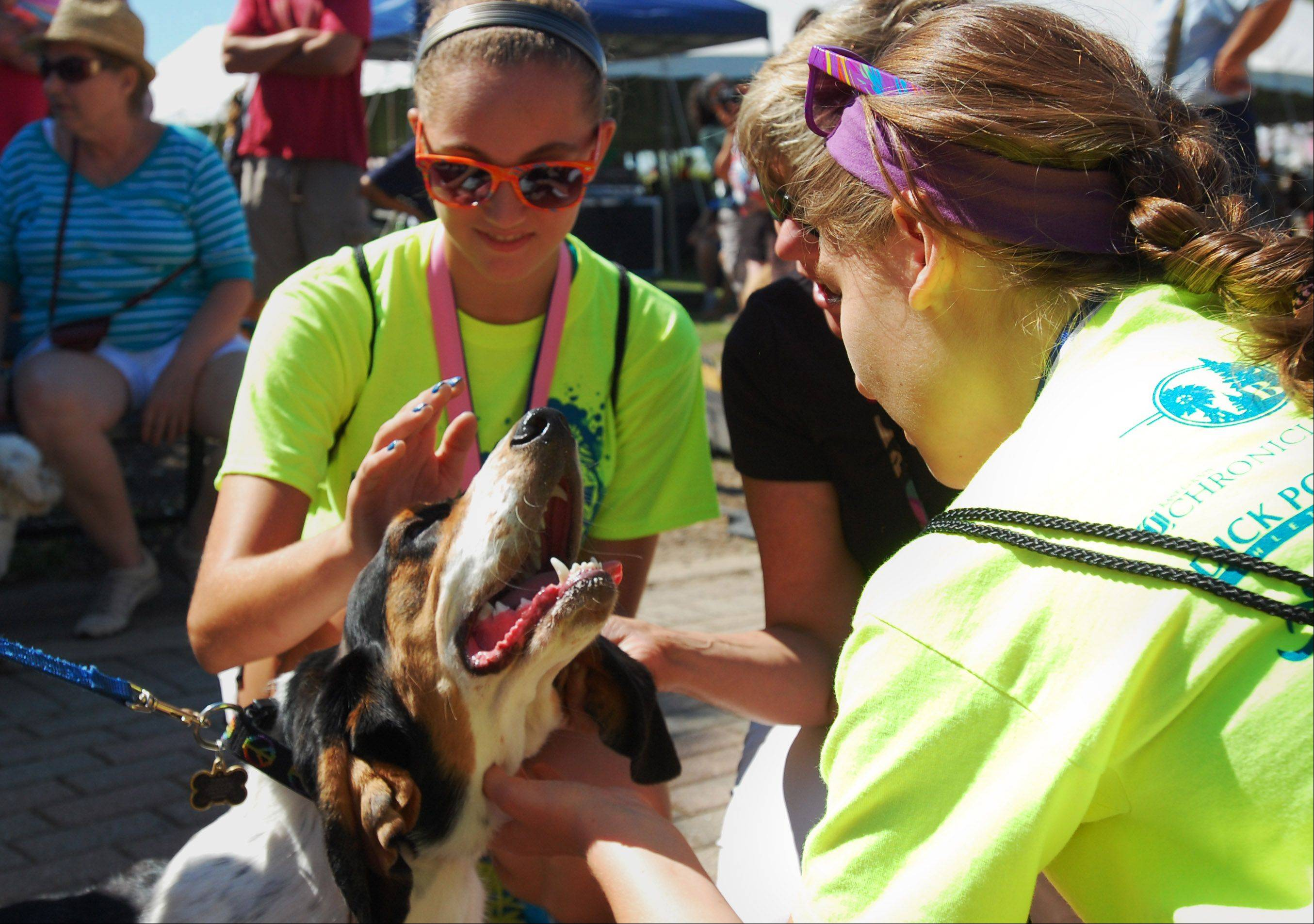 From left, Megan DalSanto, Kim DalSanto and Sierra Hobson, of Geneva meet Rocky Recklaus at the Windmill City Festival Saturday at the Riverwalk in Batavia. Rocky and his family participated in the Pet Parade and were in the running for the Longest Ears prize.