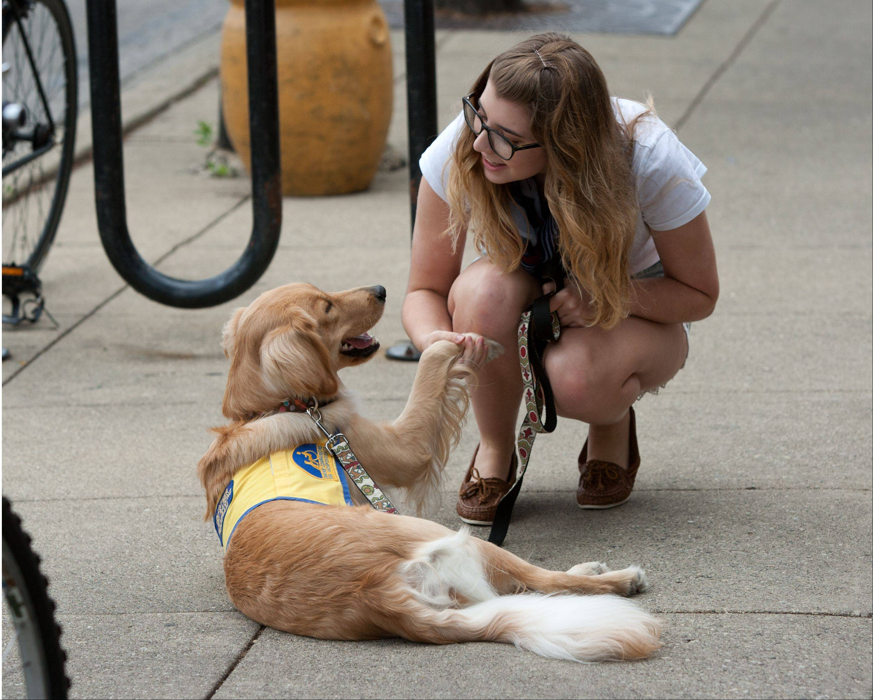 Glenbard West High School student Morgan Riley shakes hands with Friday, who she is raising for Canine Companions for Independence, which provides service dogs for people with disabilities.