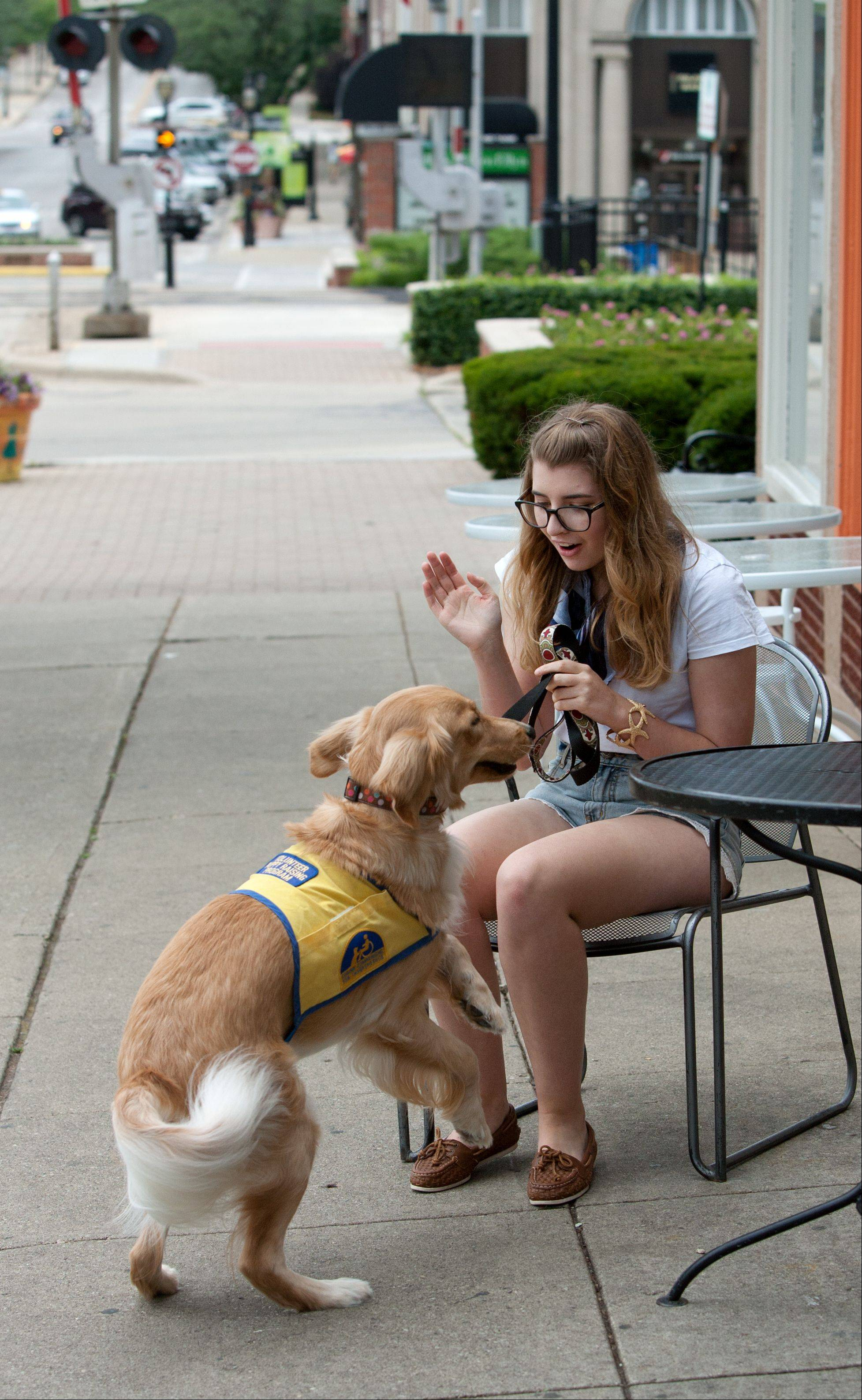 Morgan Riley takes Friday into downtown Glen Ellyn to help the golden retriever learn good manners in public. In restaurants, the dogs learn to lie quietly under the table so people often do not even know they are there.