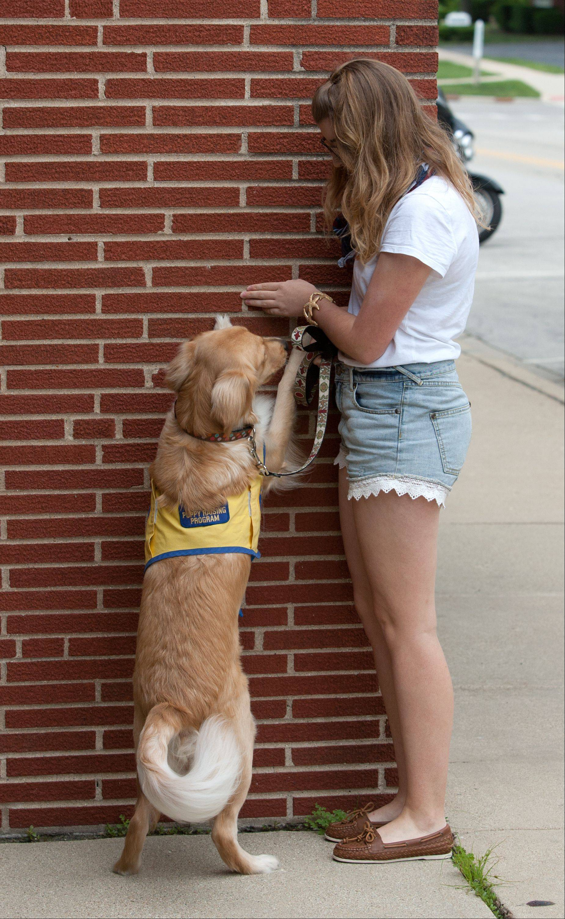 "Morgan Riley gives Friday an ""up"" command to put her front paws against a wall. Friday may later use that action to turn light switches on and off for someone with a disability."