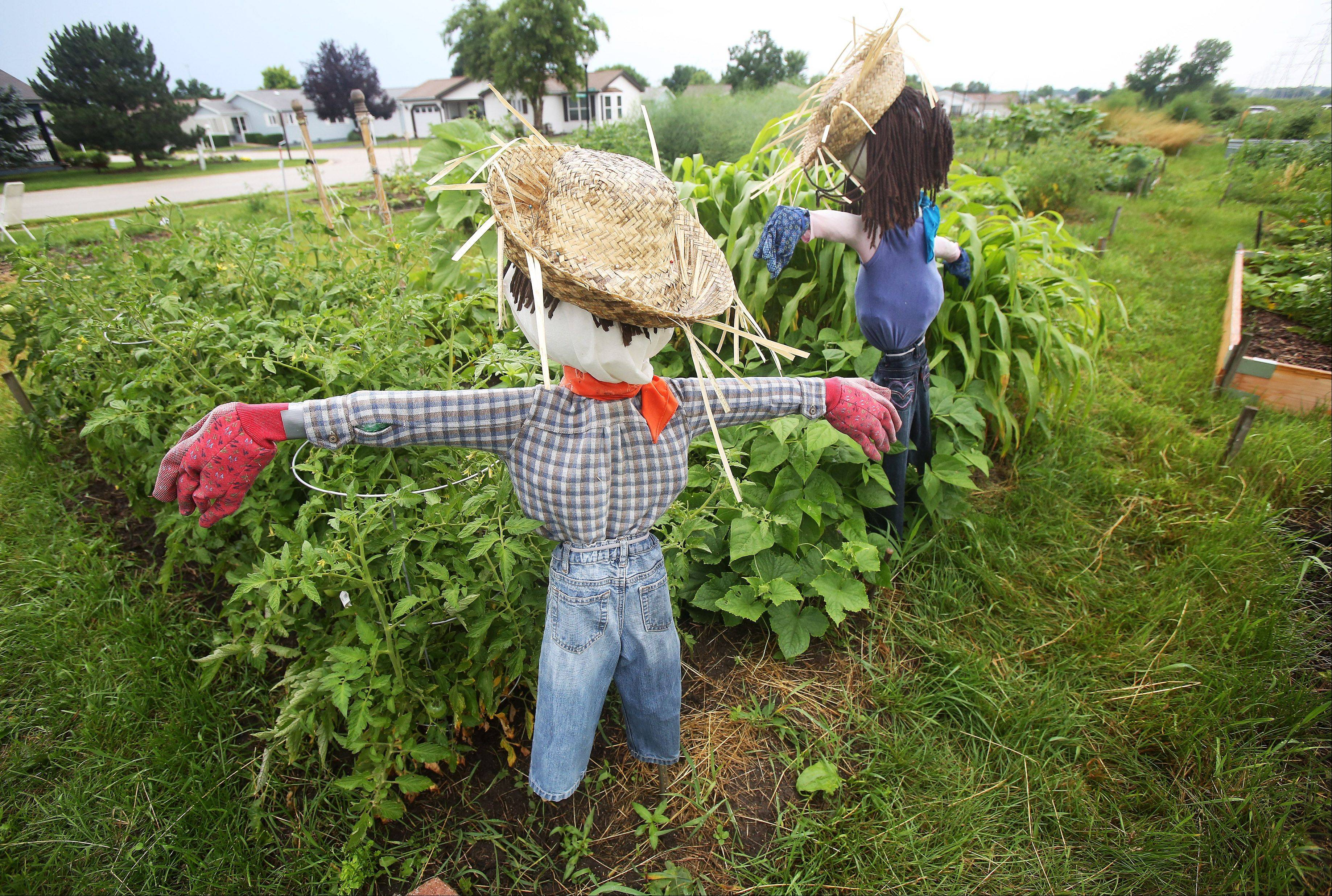 Resident Victory Garden at Saddlebrook Farms in Grayslake has more than 200 plots for residents to tend.