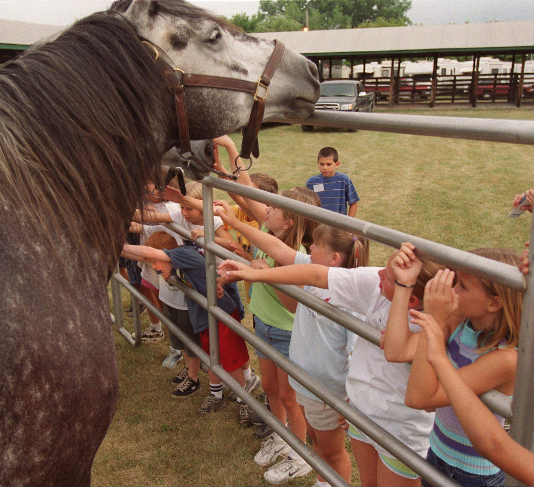 Rosie, a Percheron mare, says 'hello' to a group of children at the DuPage County Fair in Wheaton.
