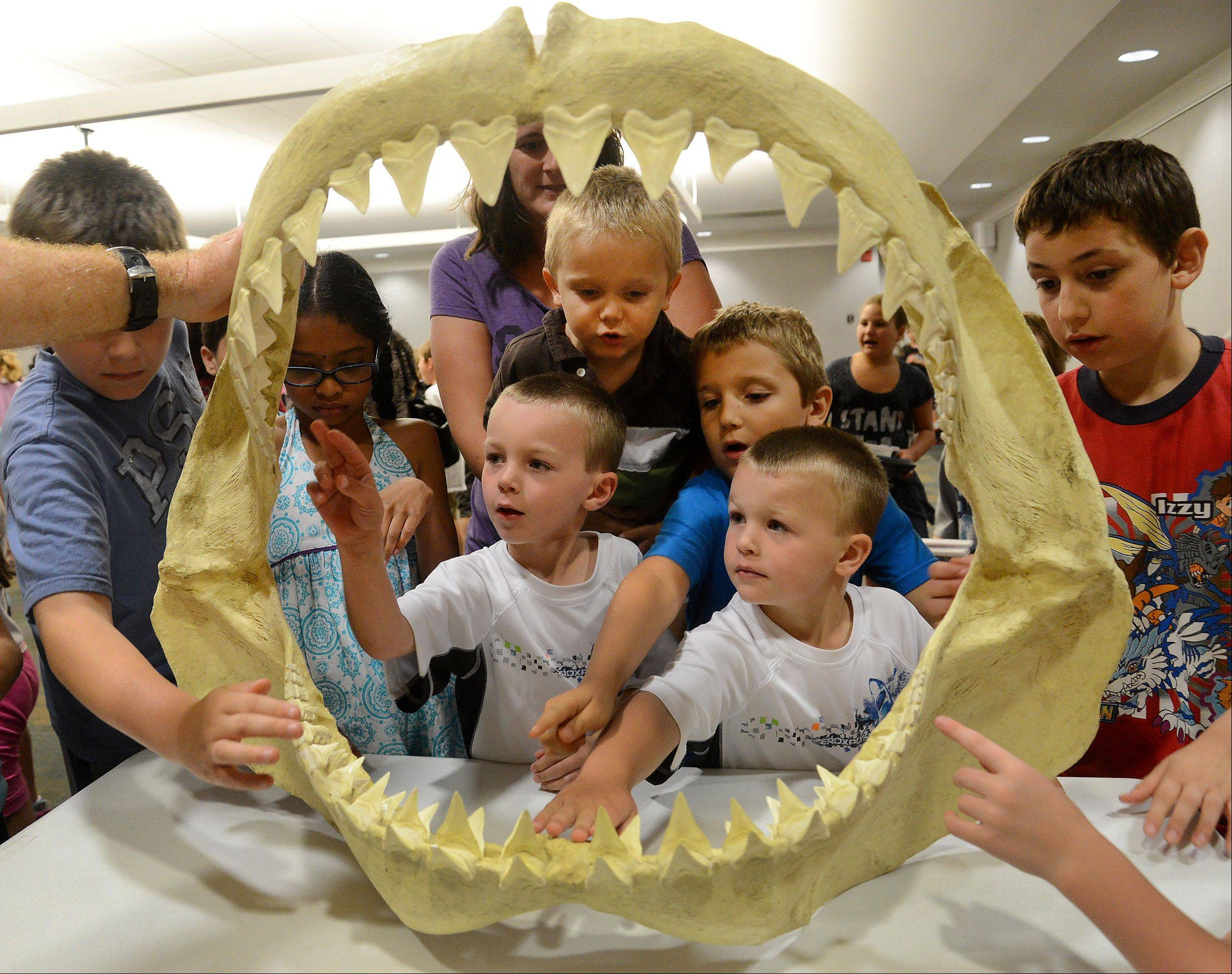 Evan, left, and Liam Fisher of Round Lake get a good look at the jaws of a 20 foot long Great White Shark during The Ocean Adventure, a program by Wayne and Karen Brown, marine biologists, about their Australian Great White Shark Expedition.