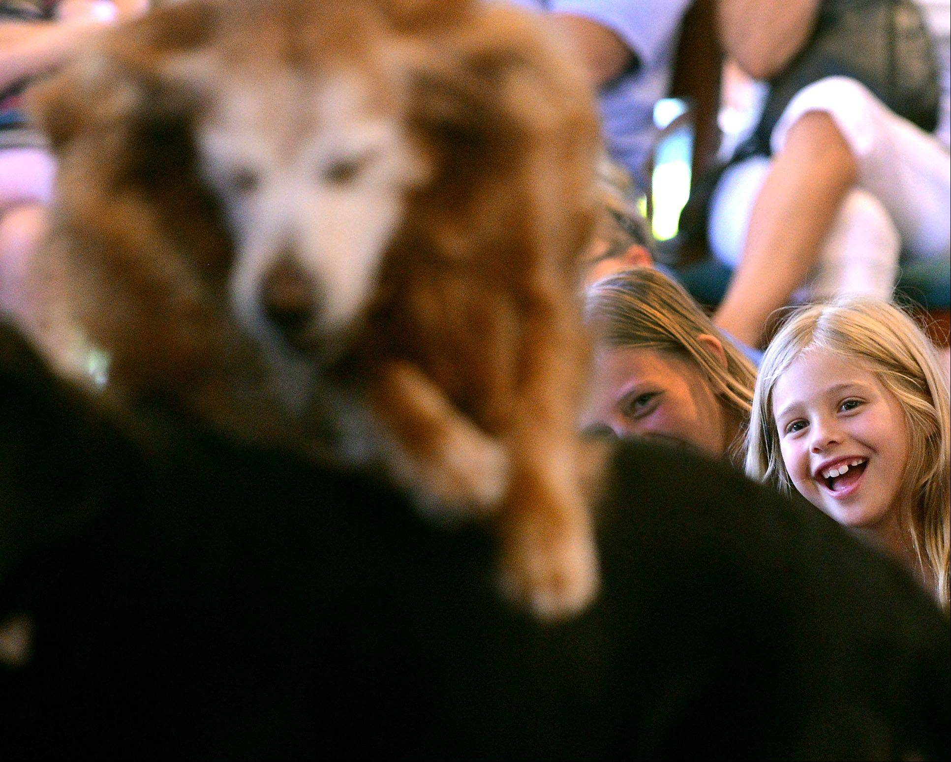 Devin Gutsmiedl, 7, of St. Charles, watches and smiles as Robin�s Dog Stars perform at the Town and Country Public Library in Elburn Thursday. Robin Bengtson's three dogs performed more than 40 tricks for a crowd of about 100.
