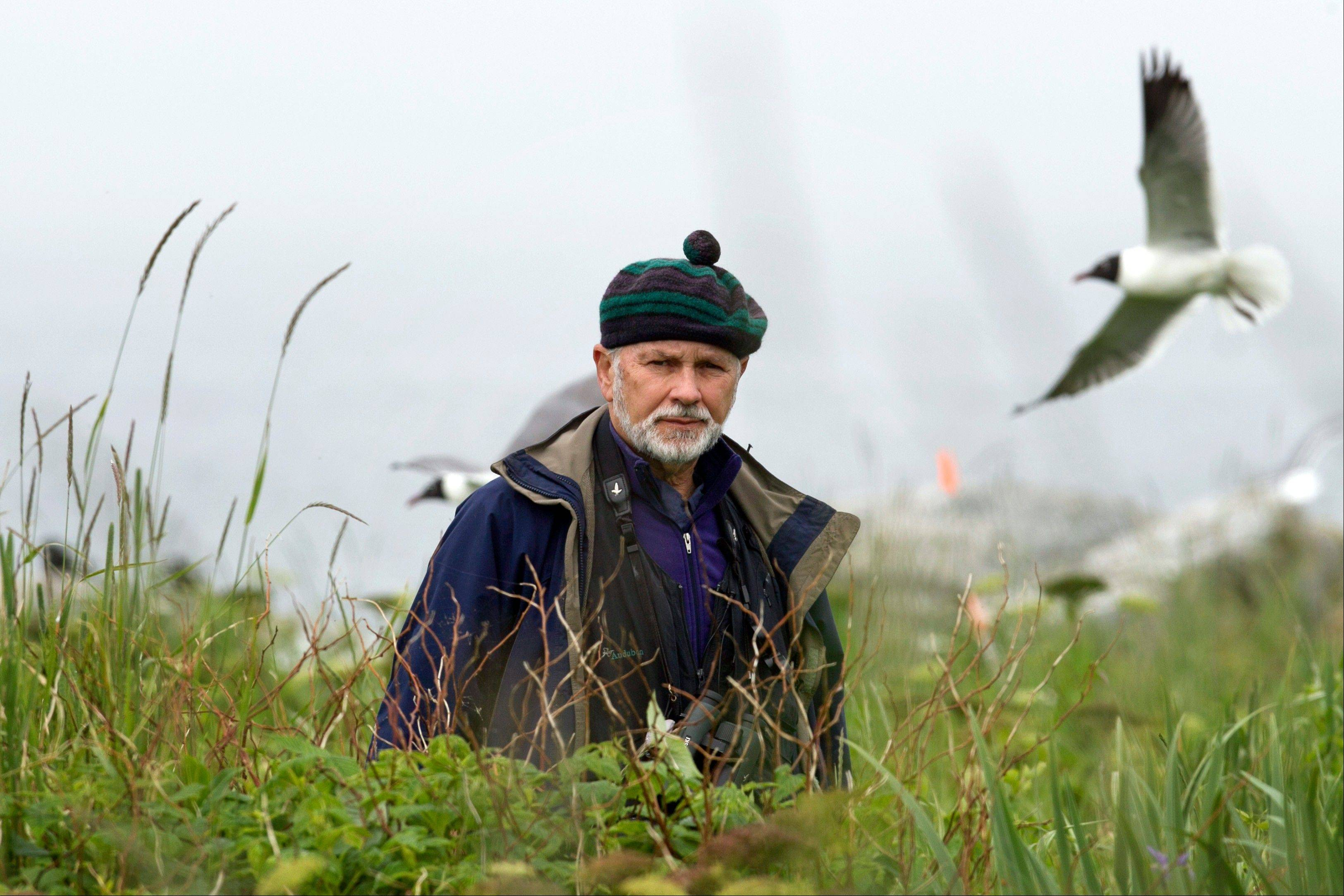 Dr. Steve Kress walks through tall vegetation on Eastern Egg Rock, a seven-acre island where he led the successful effort to recolonize puffins off the Maine coast.